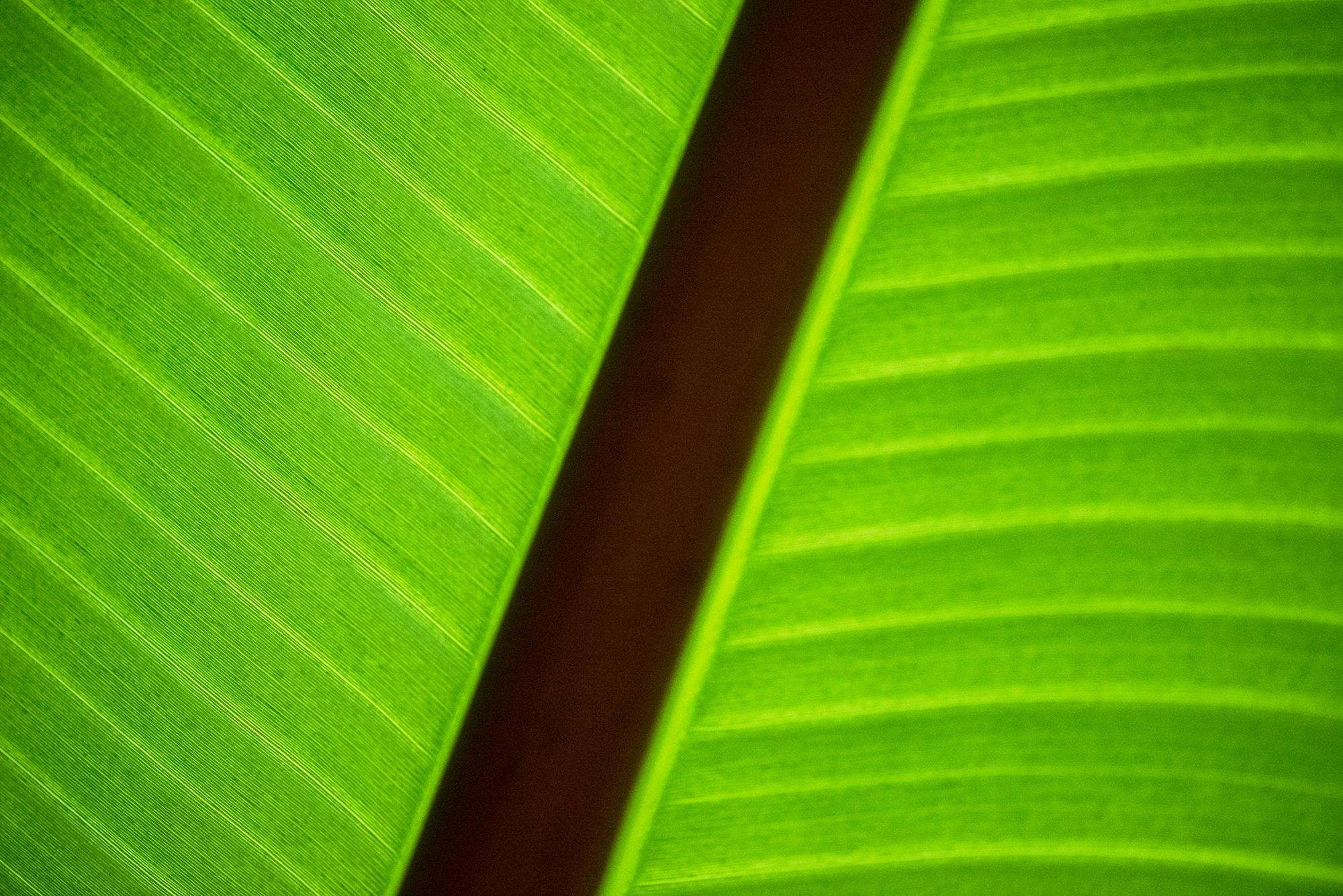 Free Images : tree, nature, forest, grass, sharp, light, sunlight ...