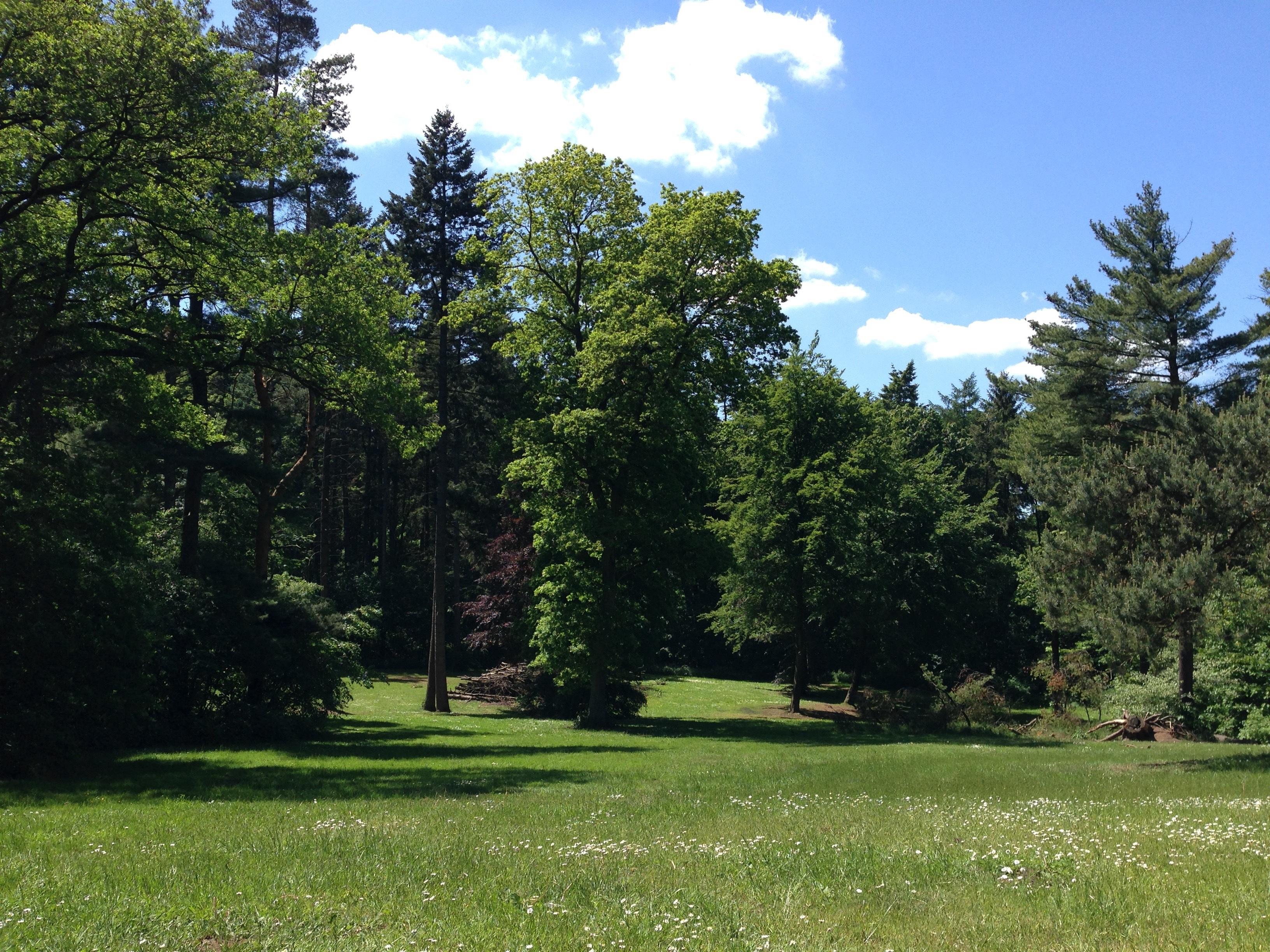 Fotos gratis rbol naturaleza bosque c sped cielo for Arboles de jardin