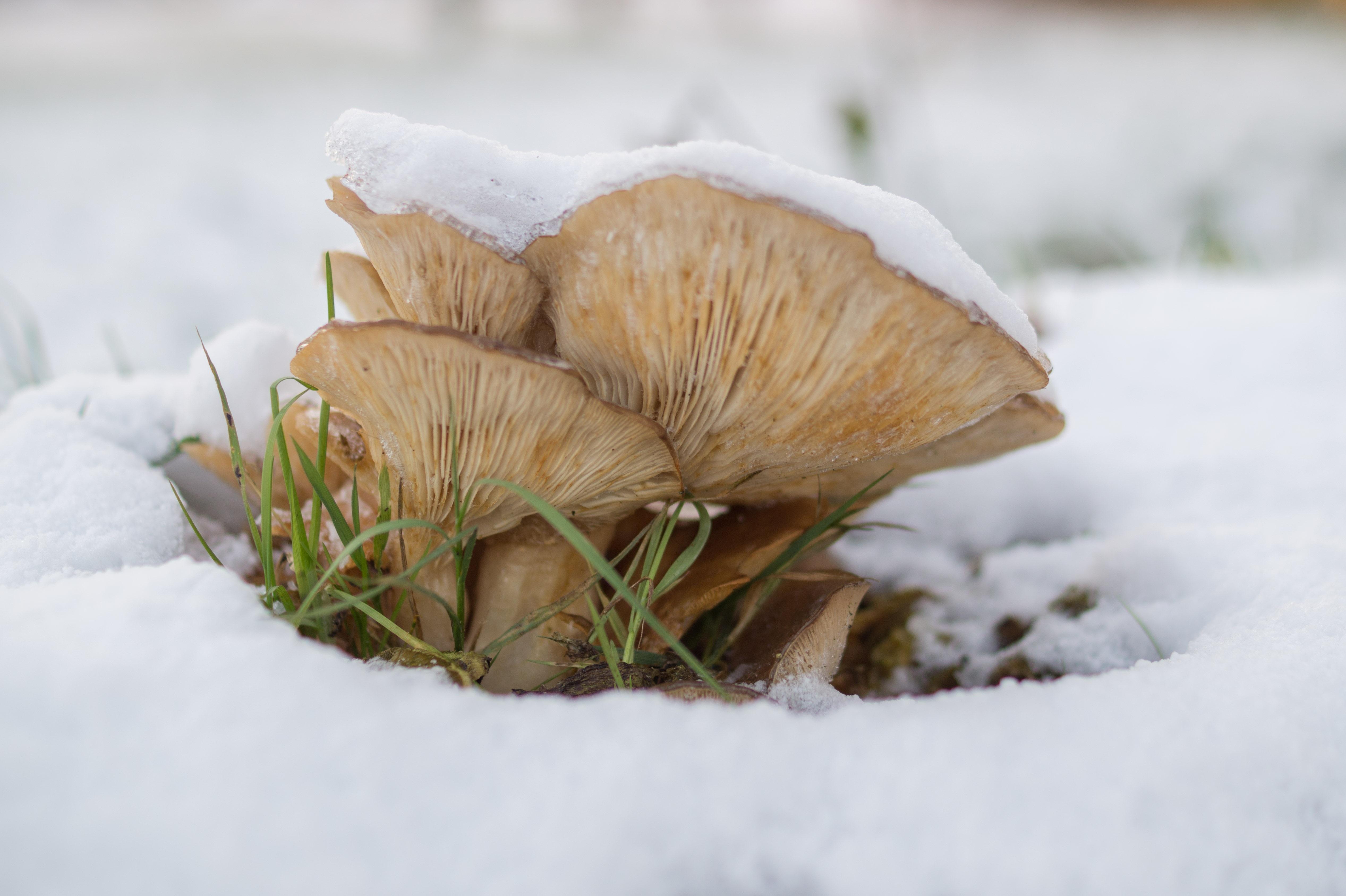 готовность пирога фото грибов в первые морозы казанцев