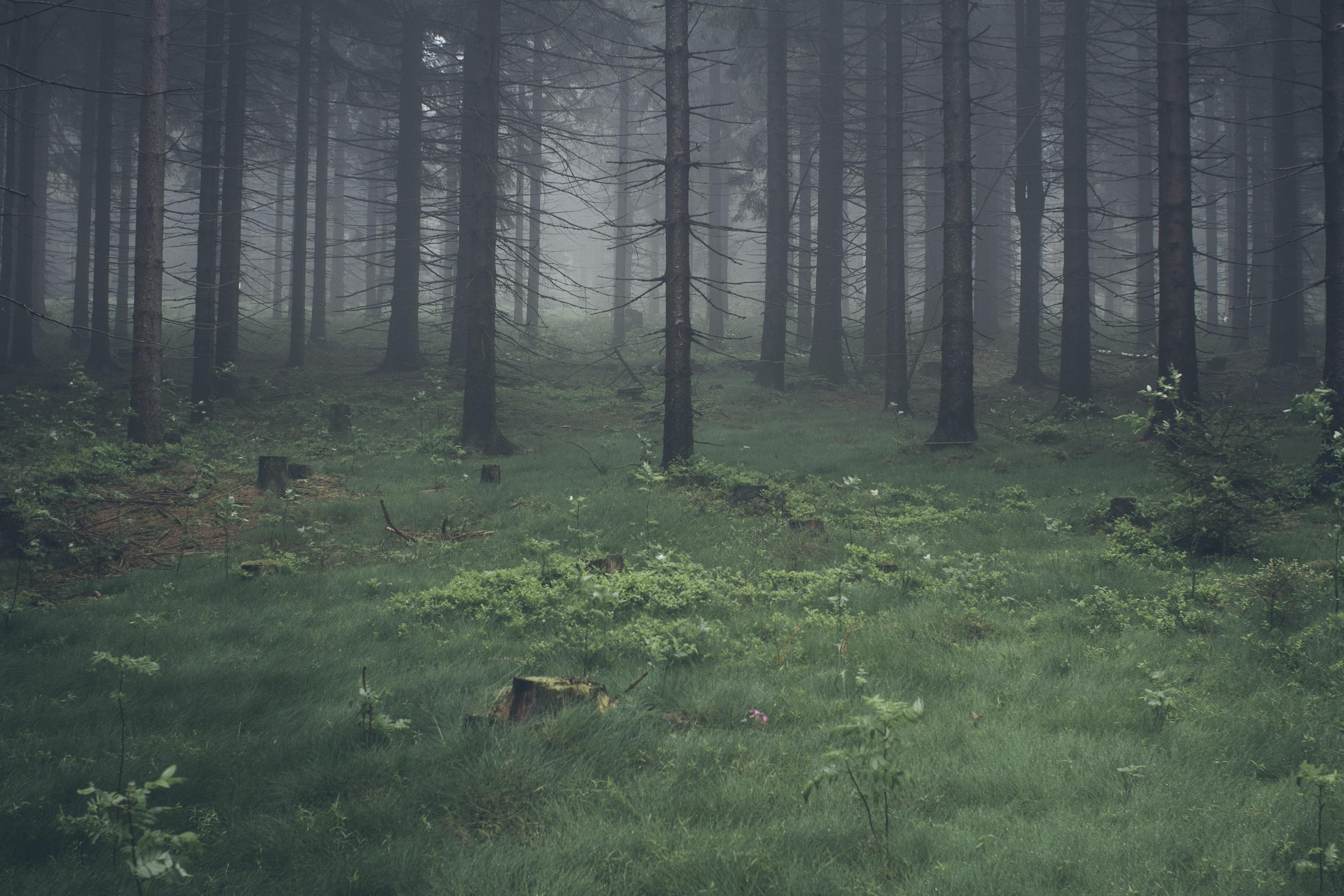 Green Woods Aesthetic