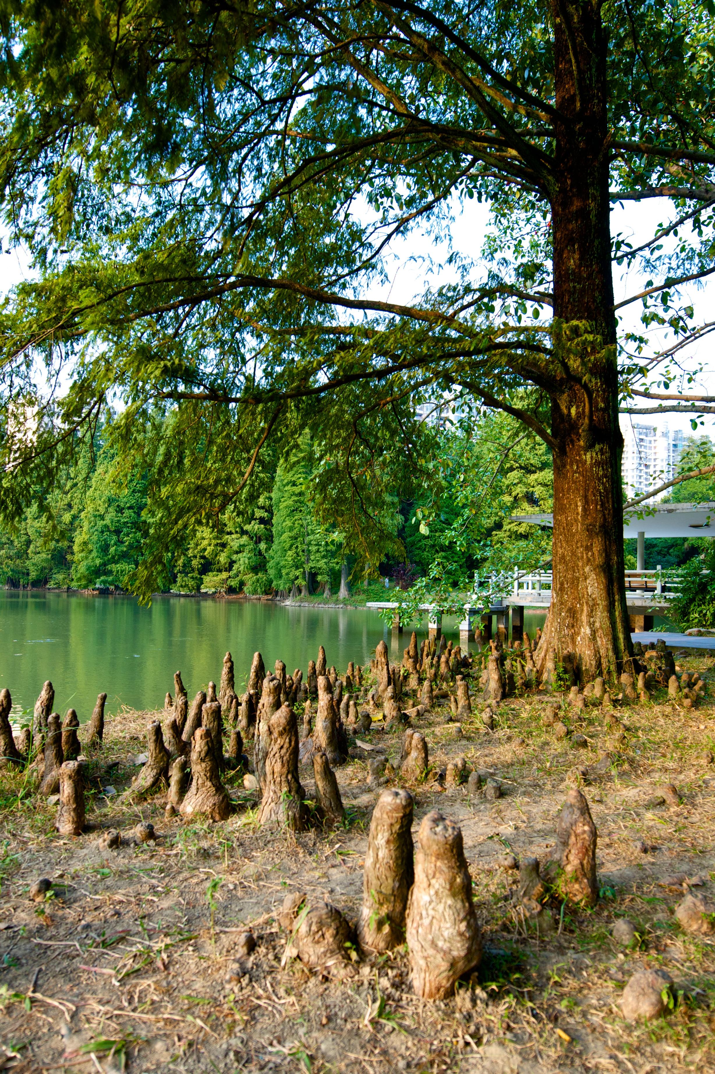 Kostenlose Foto Baum Natur Wald Gras Sumpf Wildnis Himmel