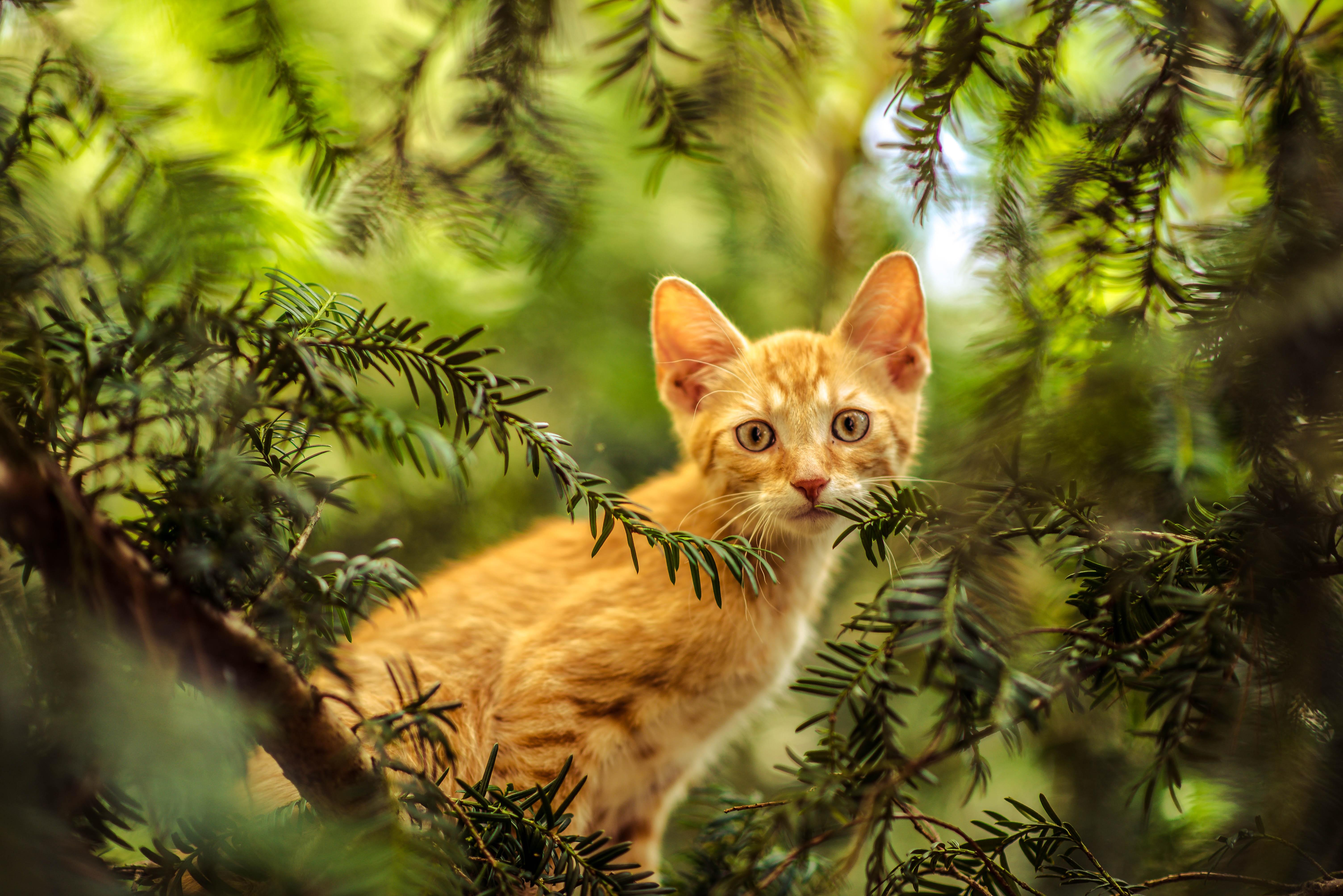 Картинки с кошками в лесу