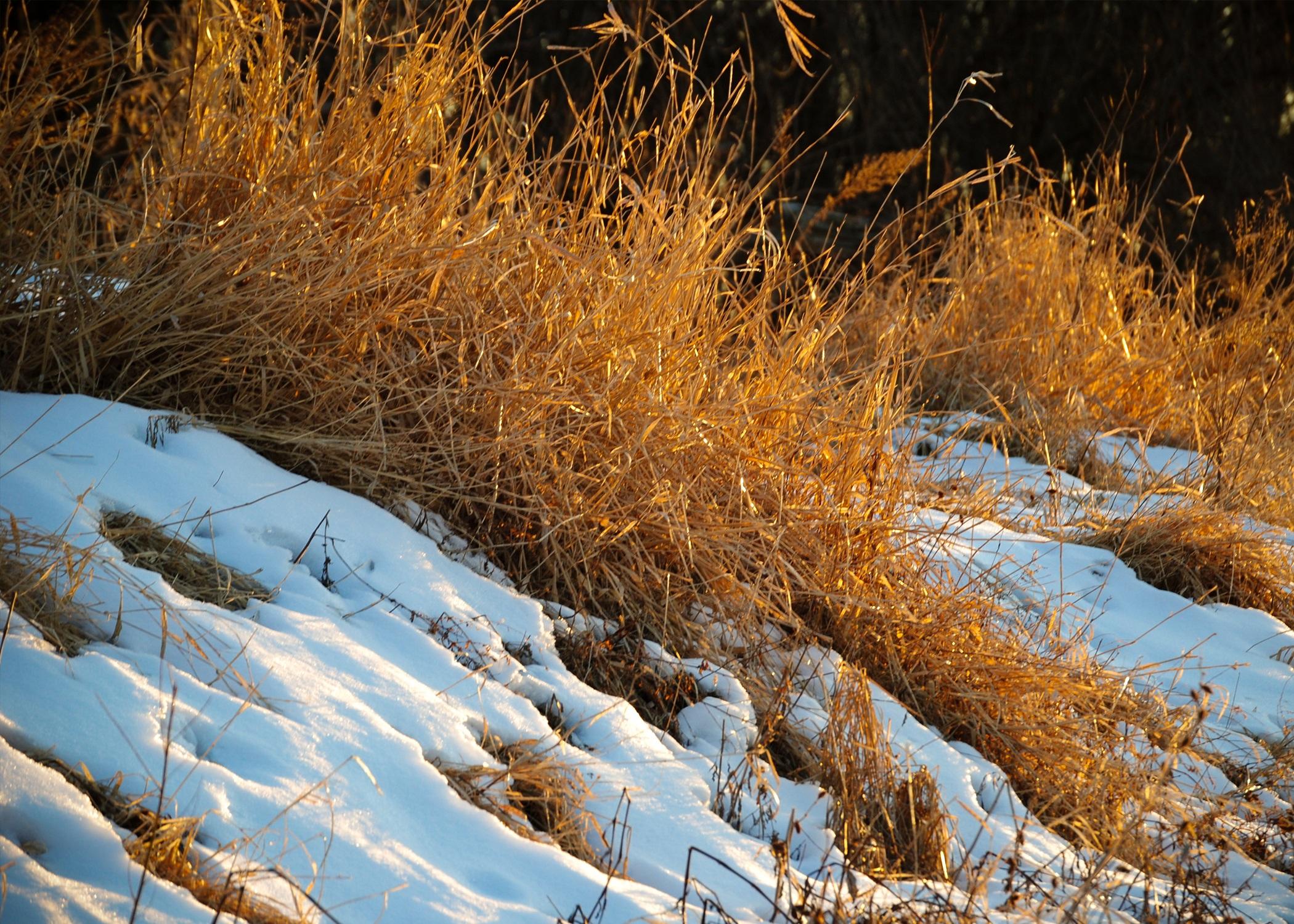 Фото травы зимой
