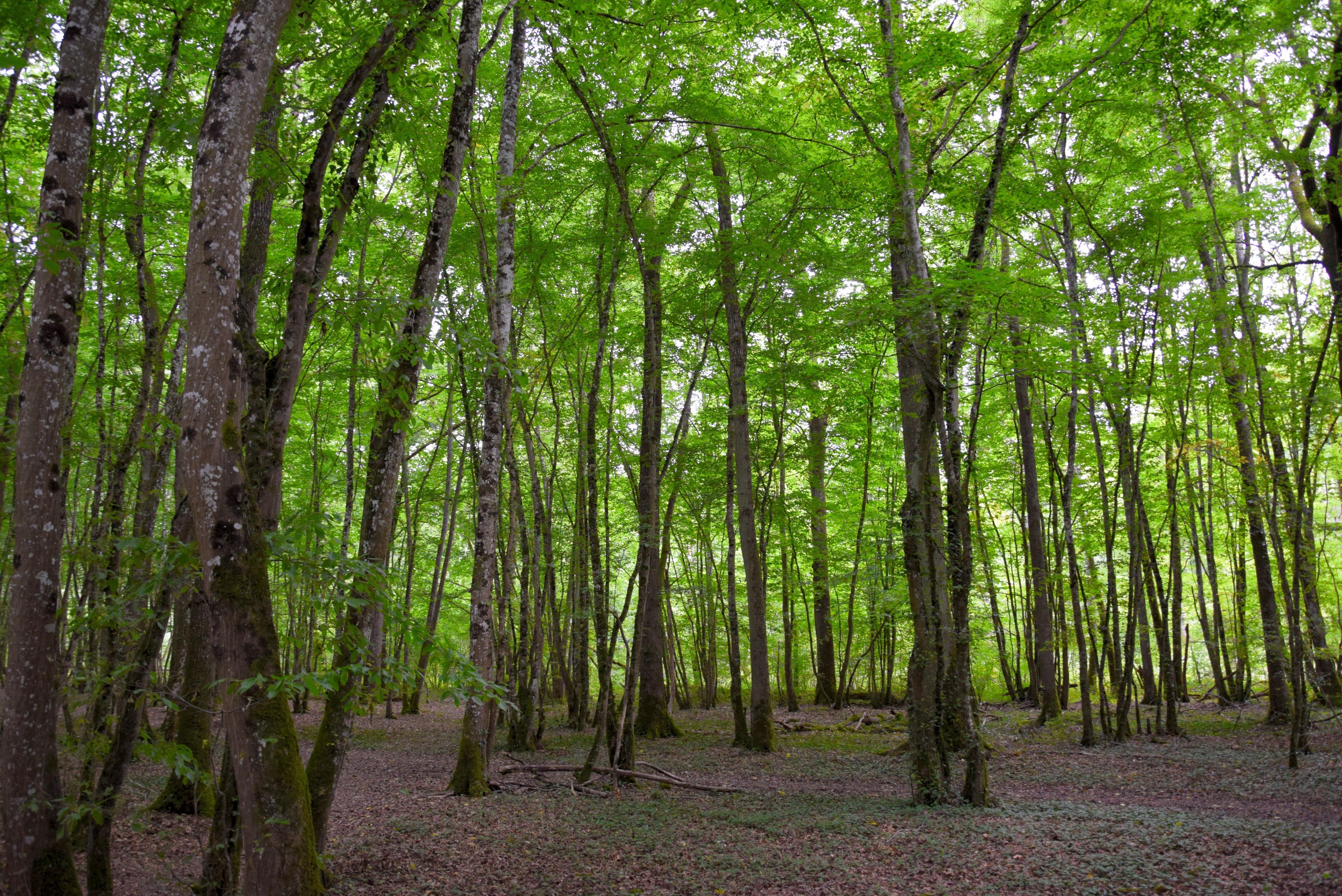 Free Images : Tree, Nature, Horizon, Branch, Bokeh