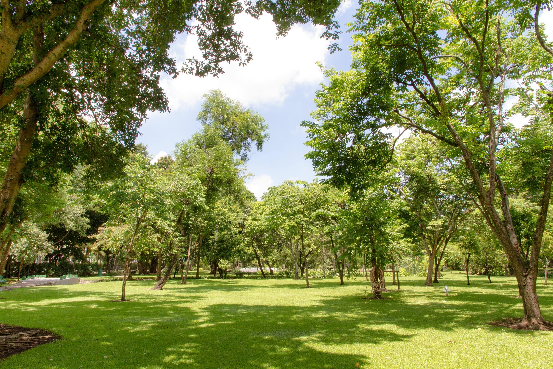 Park Als Tuin : Gratis afbeeldingen : boom natuur bos gazon weide uitzicht