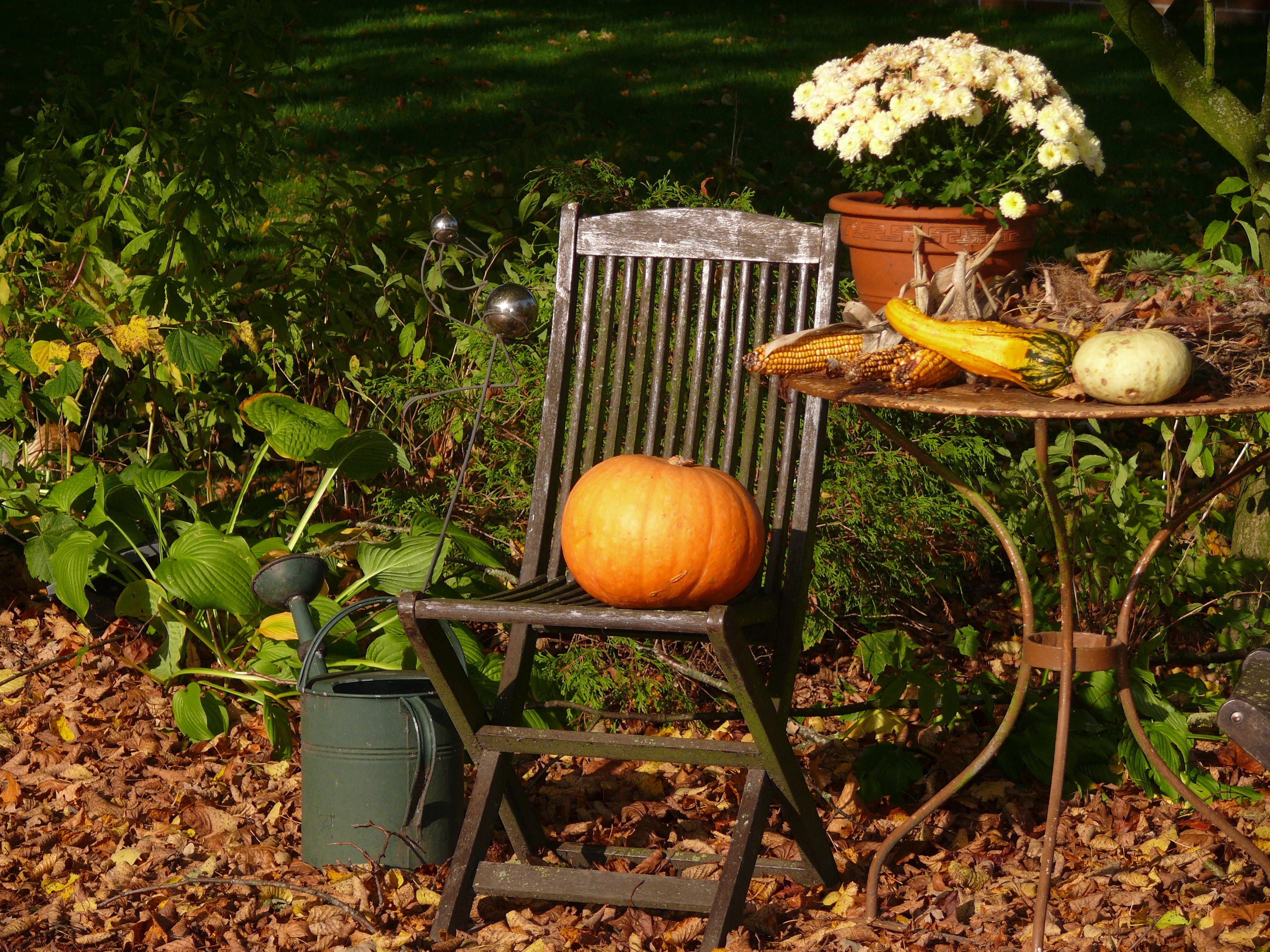 Картинки осенний огород