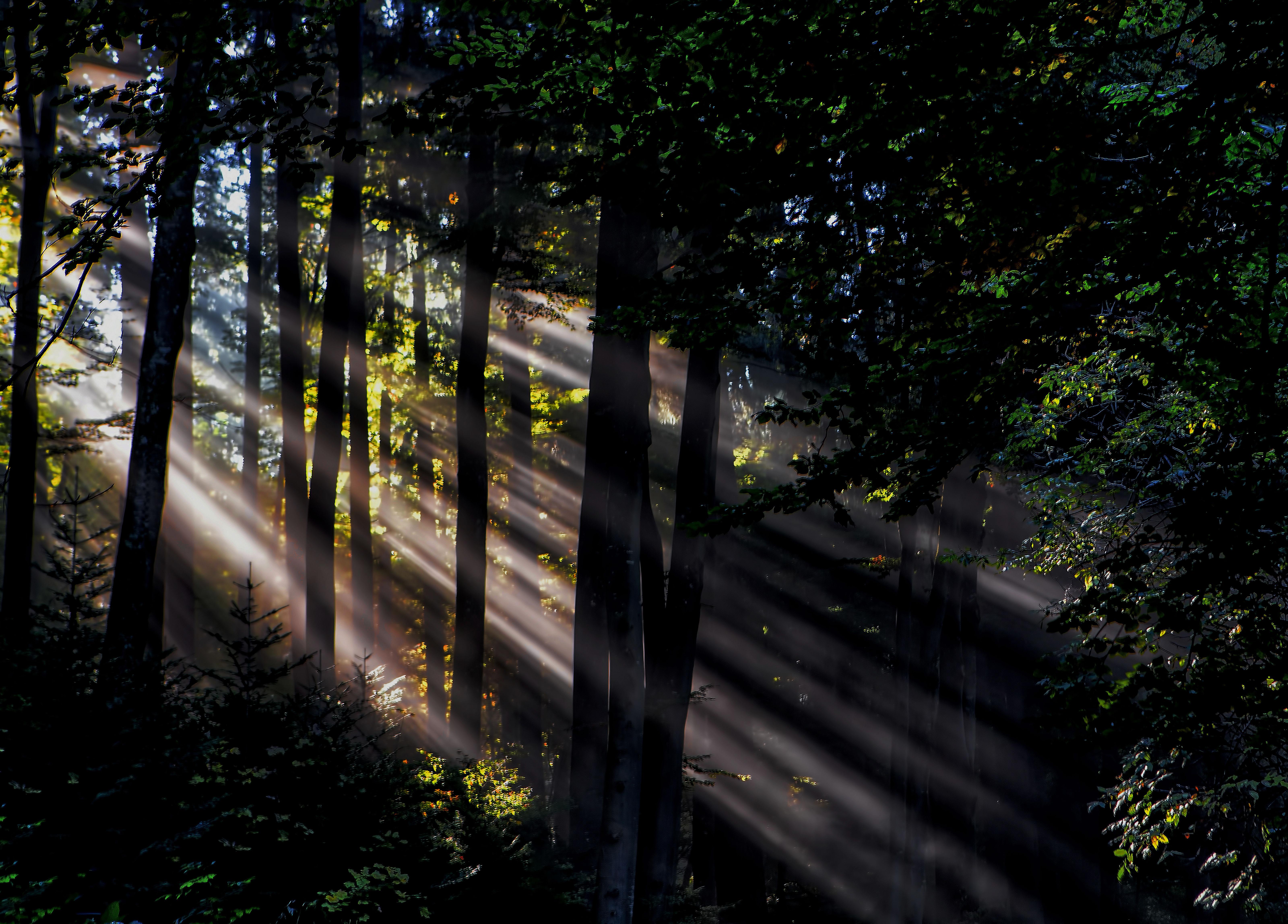 Free tree nature forest light night sunlight morning