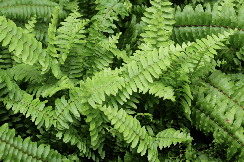 free images tree nature forest light sun leaf flower