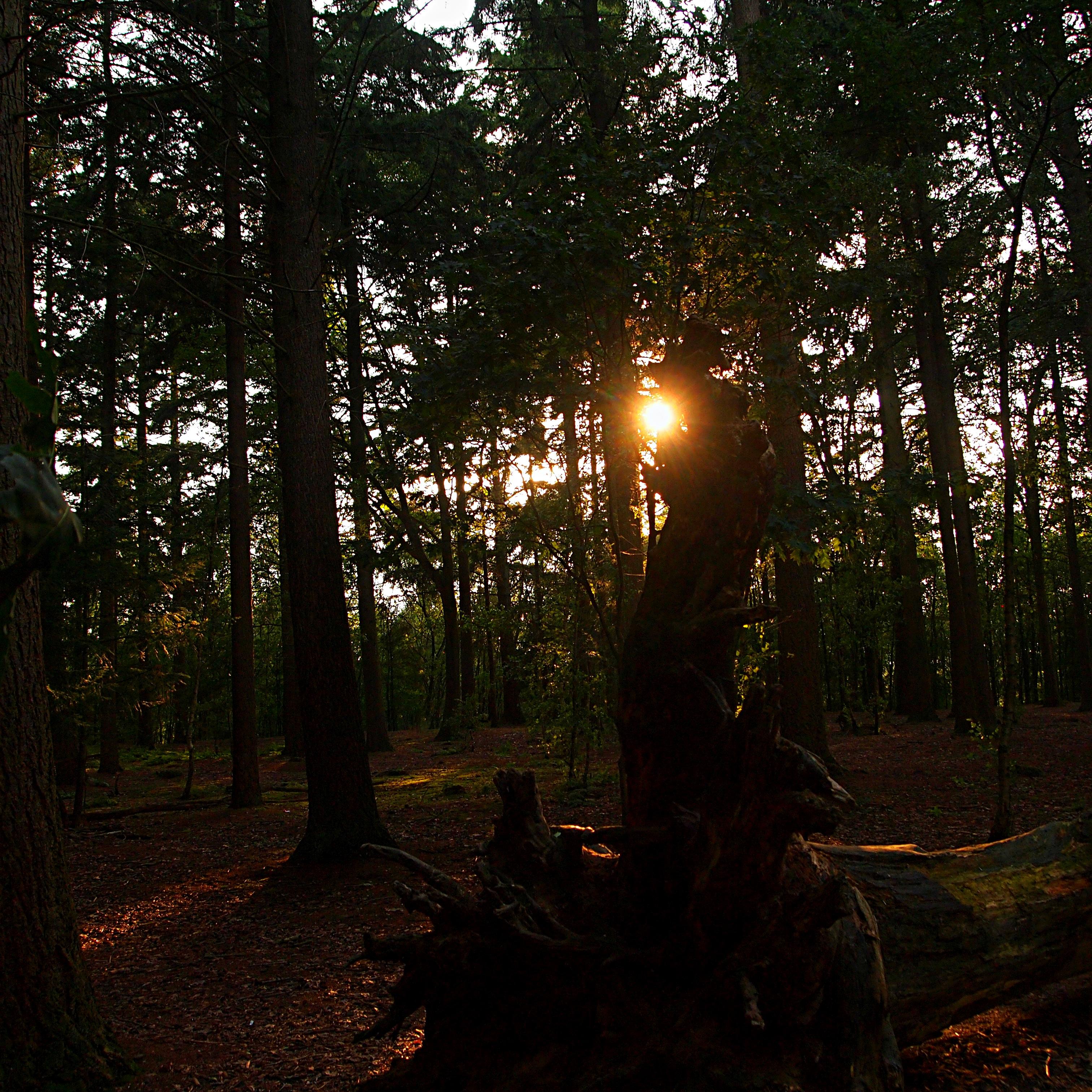 Tree Nature Forest Light Plant Sunset Sunlight Morning Leaf Atmosphere Dark Evening Jungle Autumn Contrast Darkness
