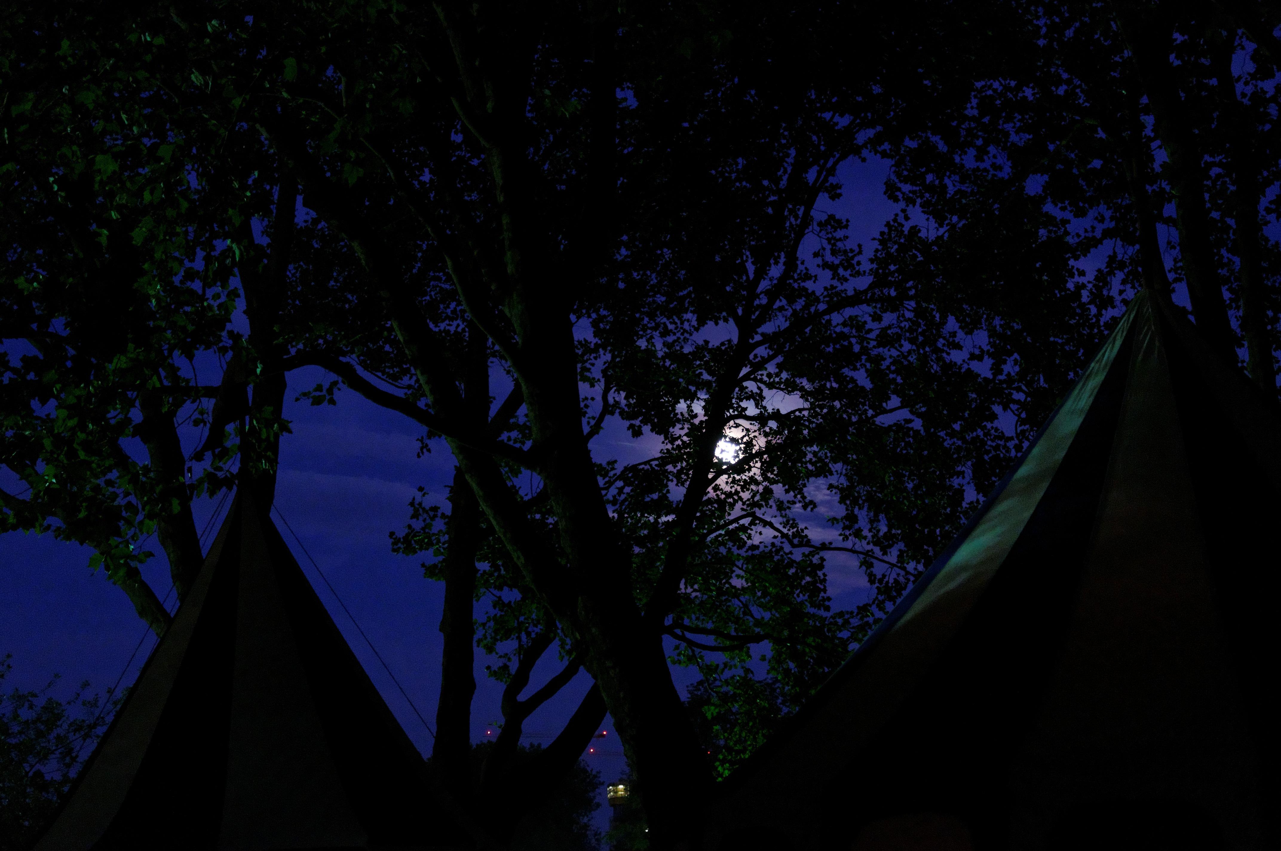Gambar Pohon Alam Hutan Cahaya Langit Sinar Matahari