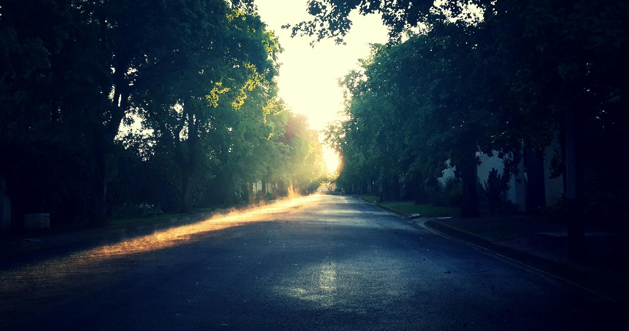 Tree Nature Forest Light Sun Fog Sunrise Road Mist Street Night Sunlight Morning Dawn Atmosphere Dusk