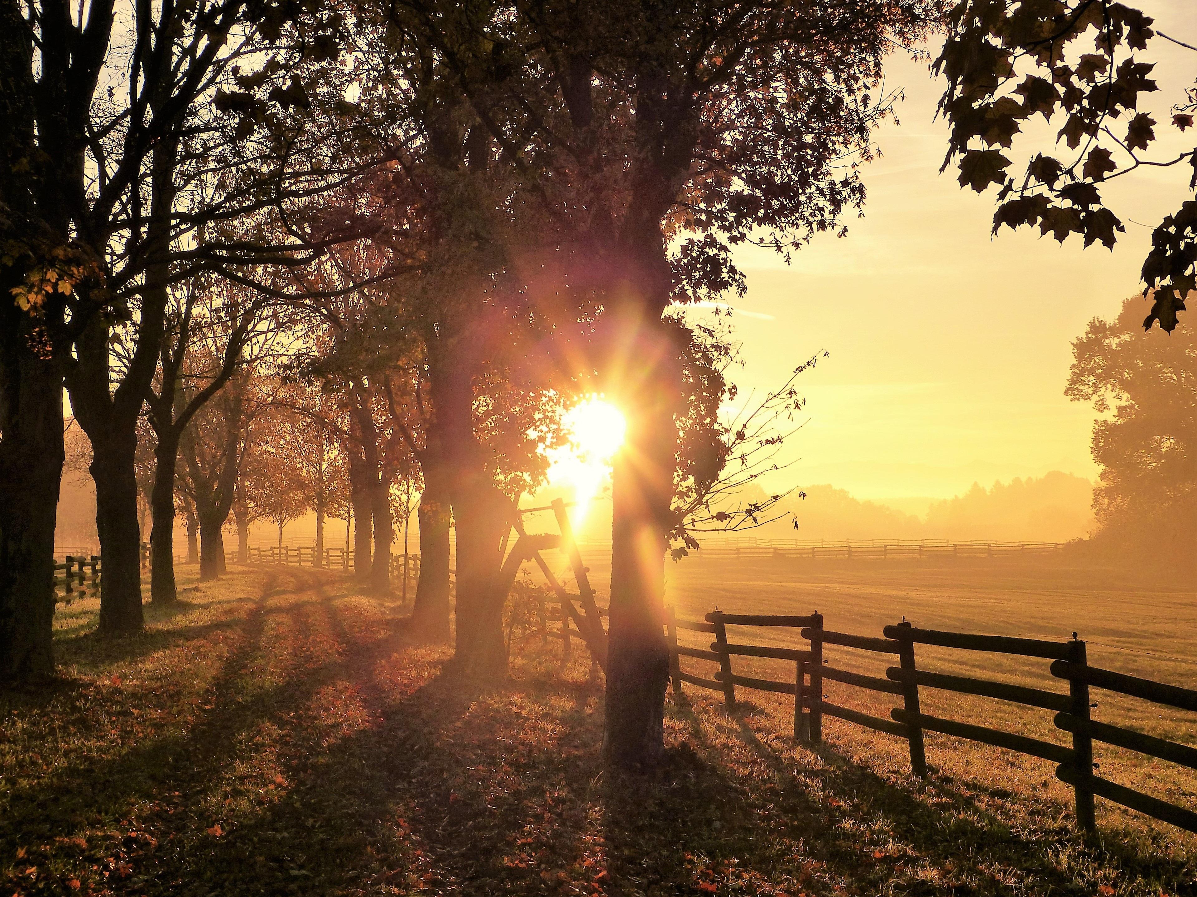 sun fog sunrise trees - photo #34