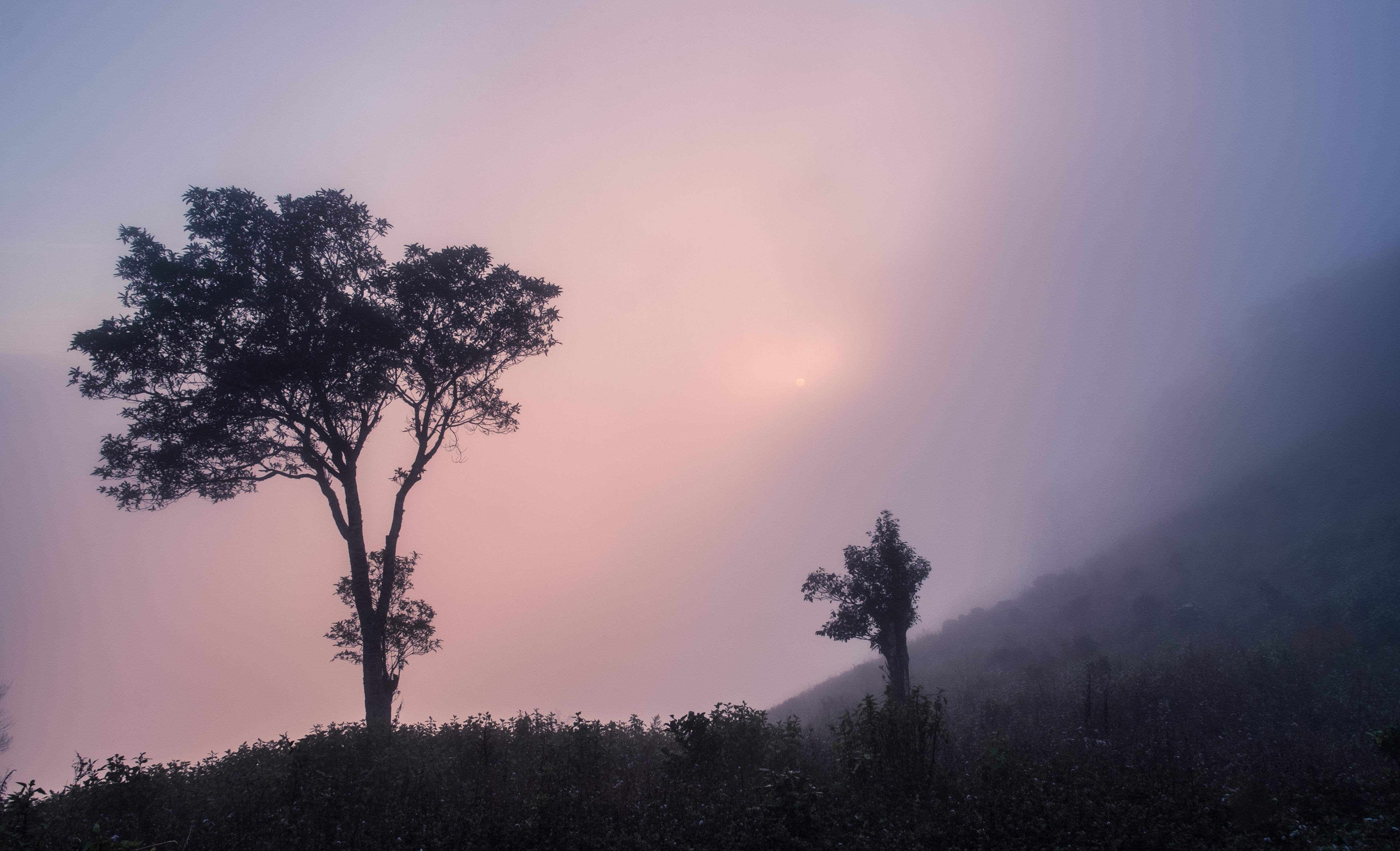 hình ảnh : cây, thiên nhiên, rừng, núi, đám mây, thực vật, Bầu trời, Sương mù, bình Minh, Hoàng hôn, sương mù, Ánh sáng mặt trời, buổi sáng, Bình minh, ...