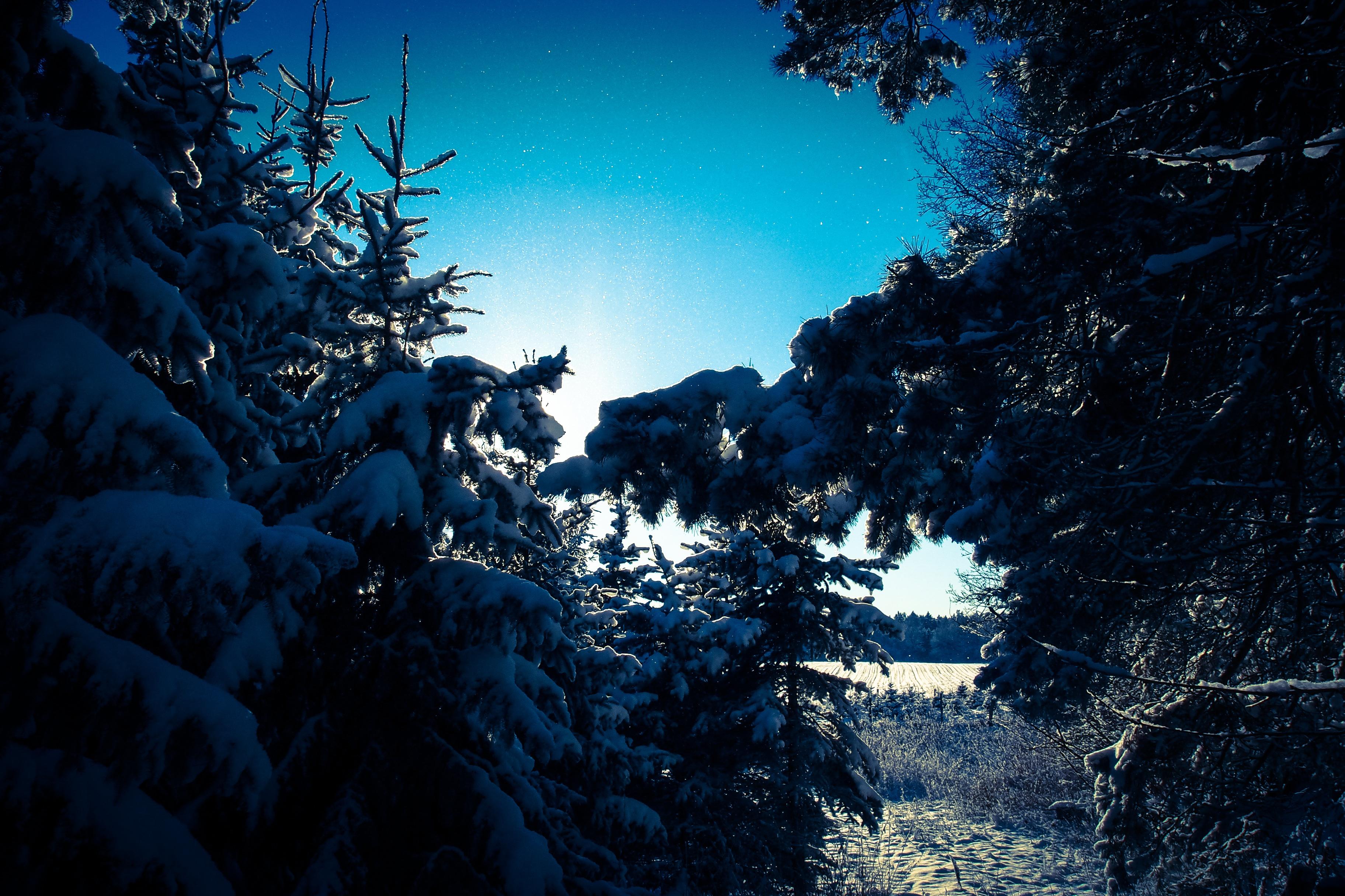 рабочие курорты зима лес картинки ночь новый диван