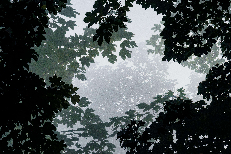 images gratuites arbre la nature for t de plein air branche noir et blanc plante ciel. Black Bedroom Furniture Sets. Home Design Ideas