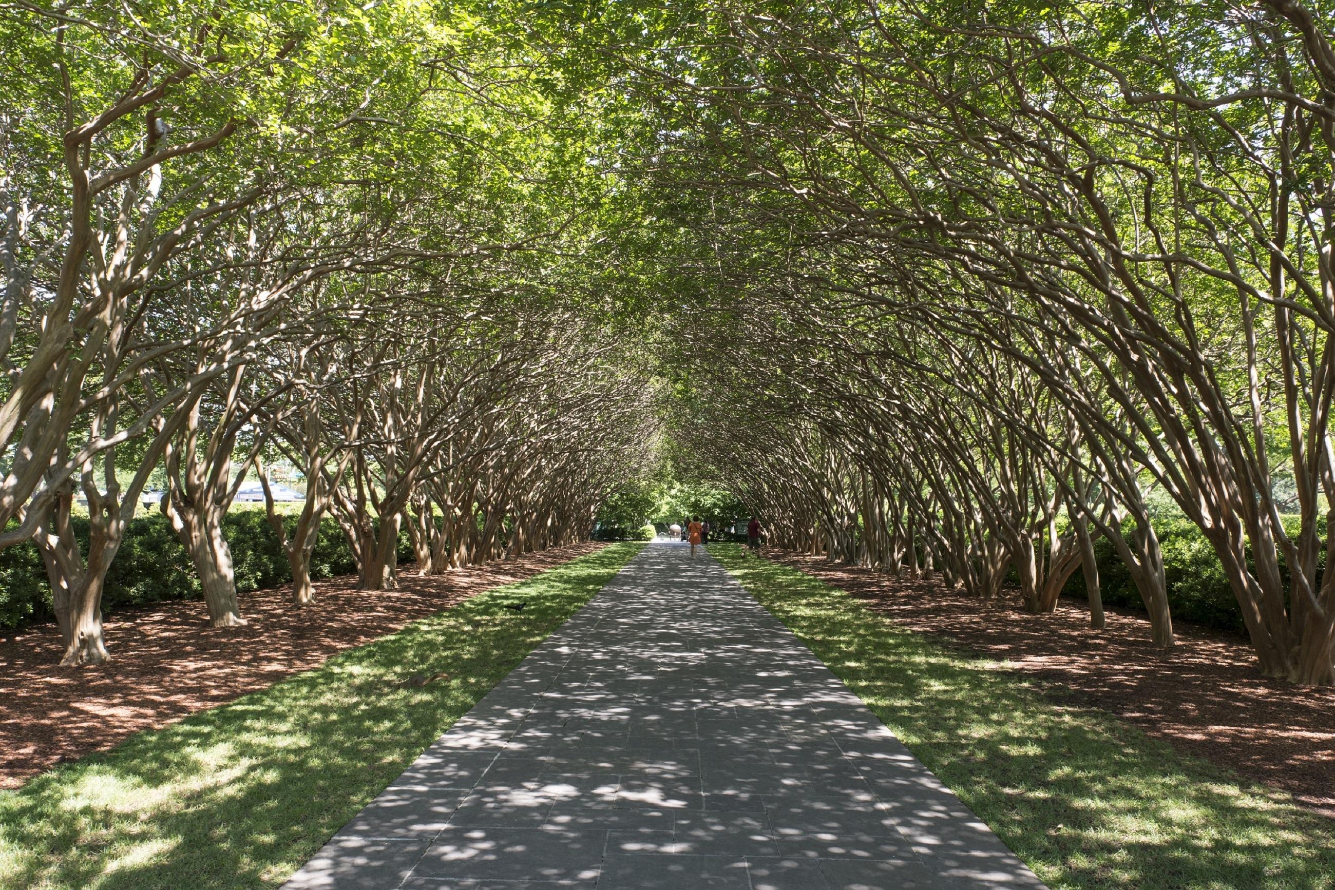 Gratuites arbre la nature forªt chemin piéton plante