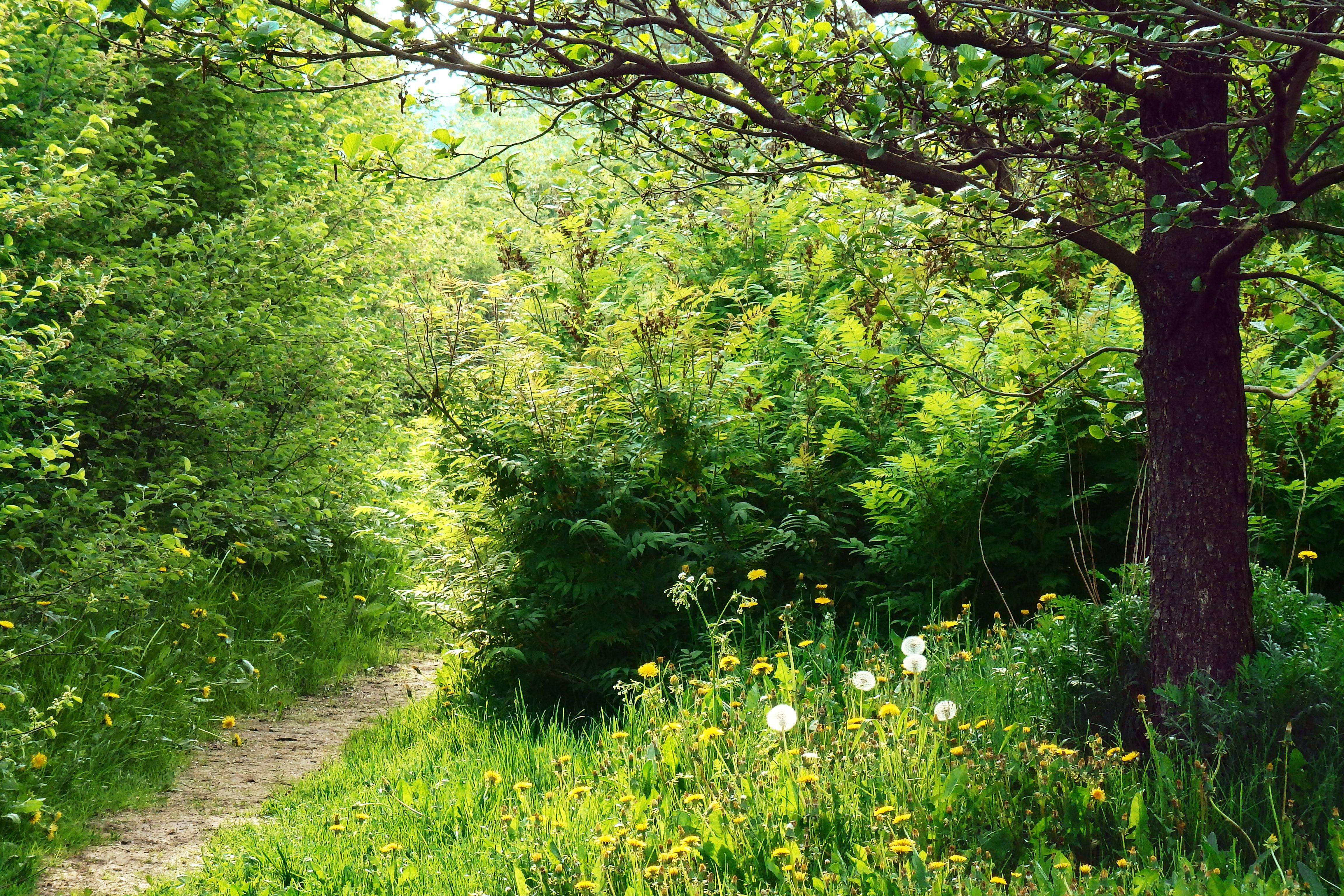 Fotos gratis rbol naturaleza bosque camino planta for Carson bosque y jardin