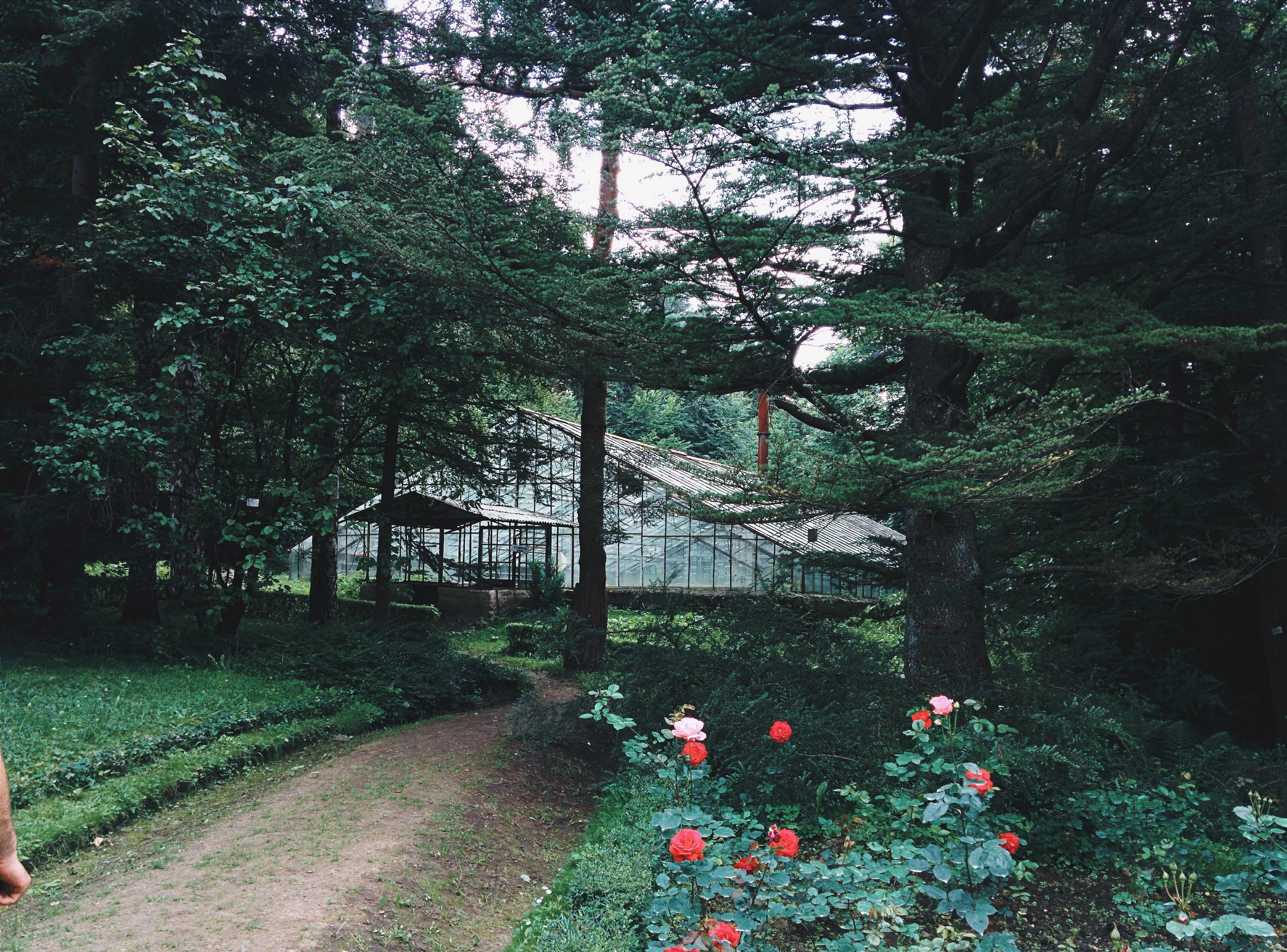 Images gratuites arbre la nature for t chemin plante for Habitat de jardin