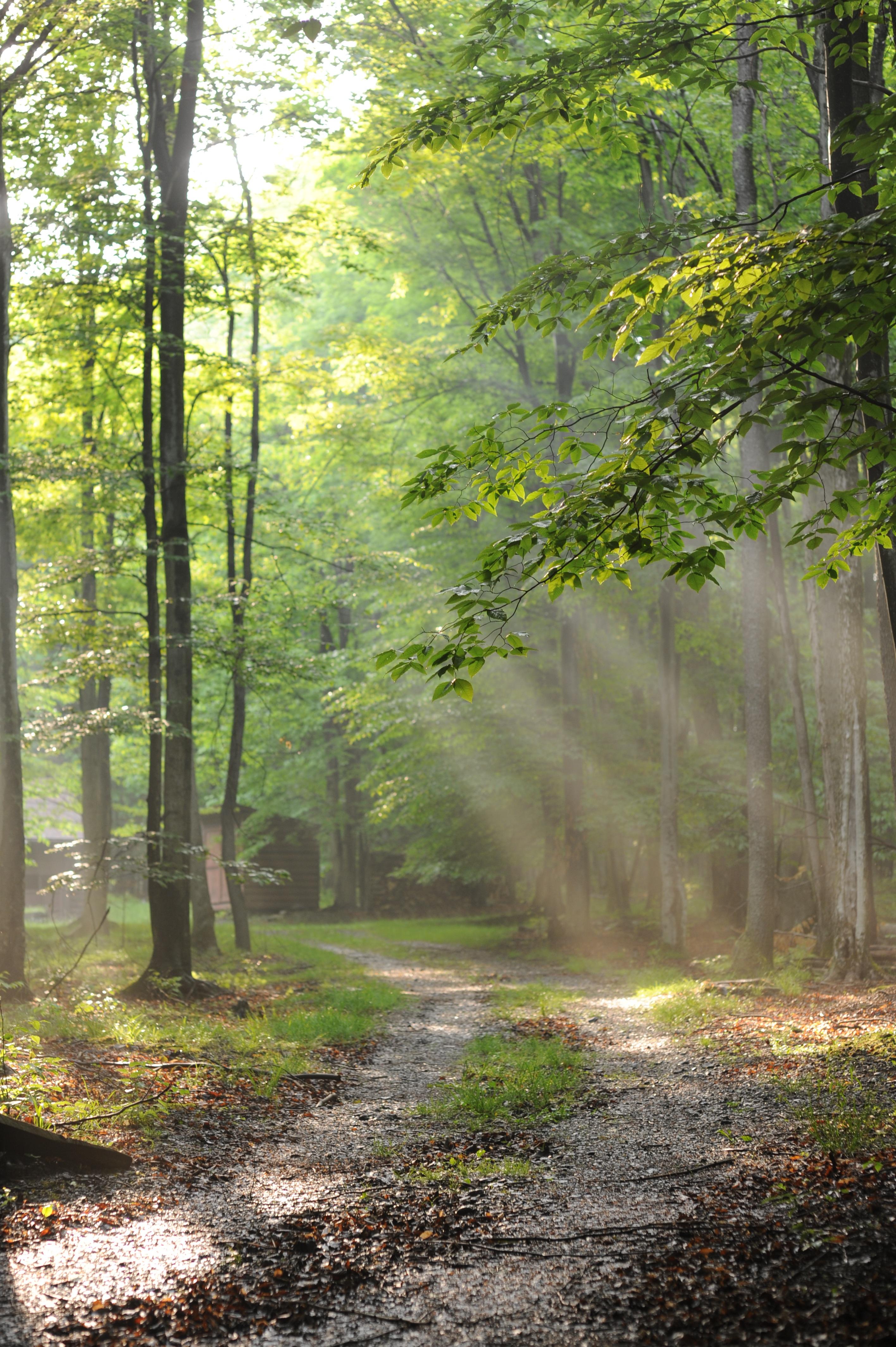 Fotos gratis rbol naturaleza bosque camino desierto for Arboles para plantar en verano