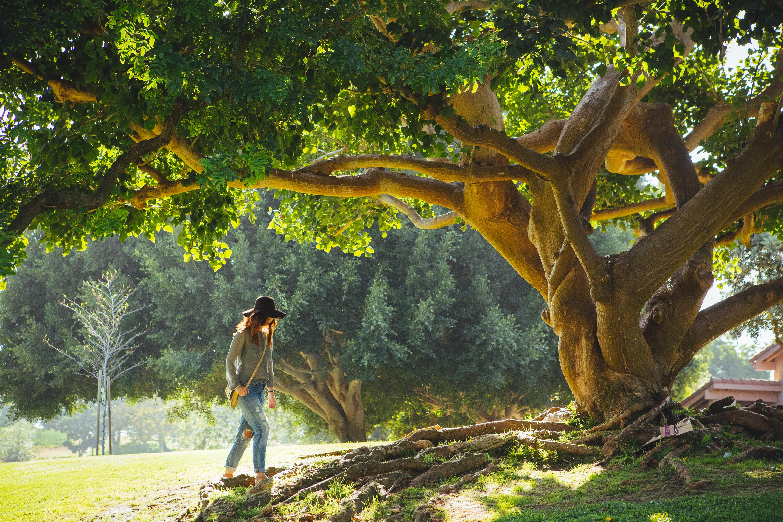 Картинка люди на дереве