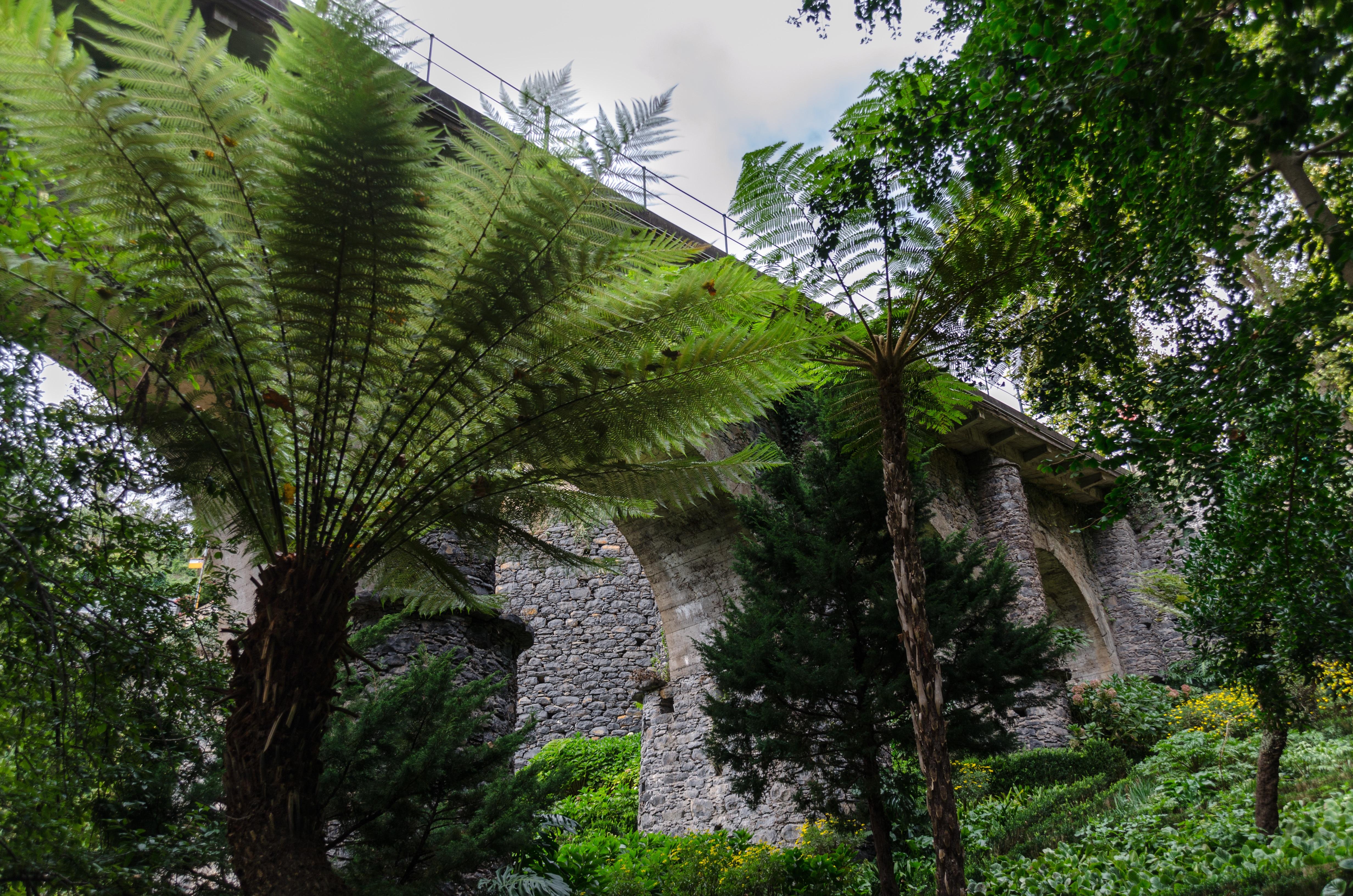 Images gratuites arbre la nature plante fleur vert for Plante jungle