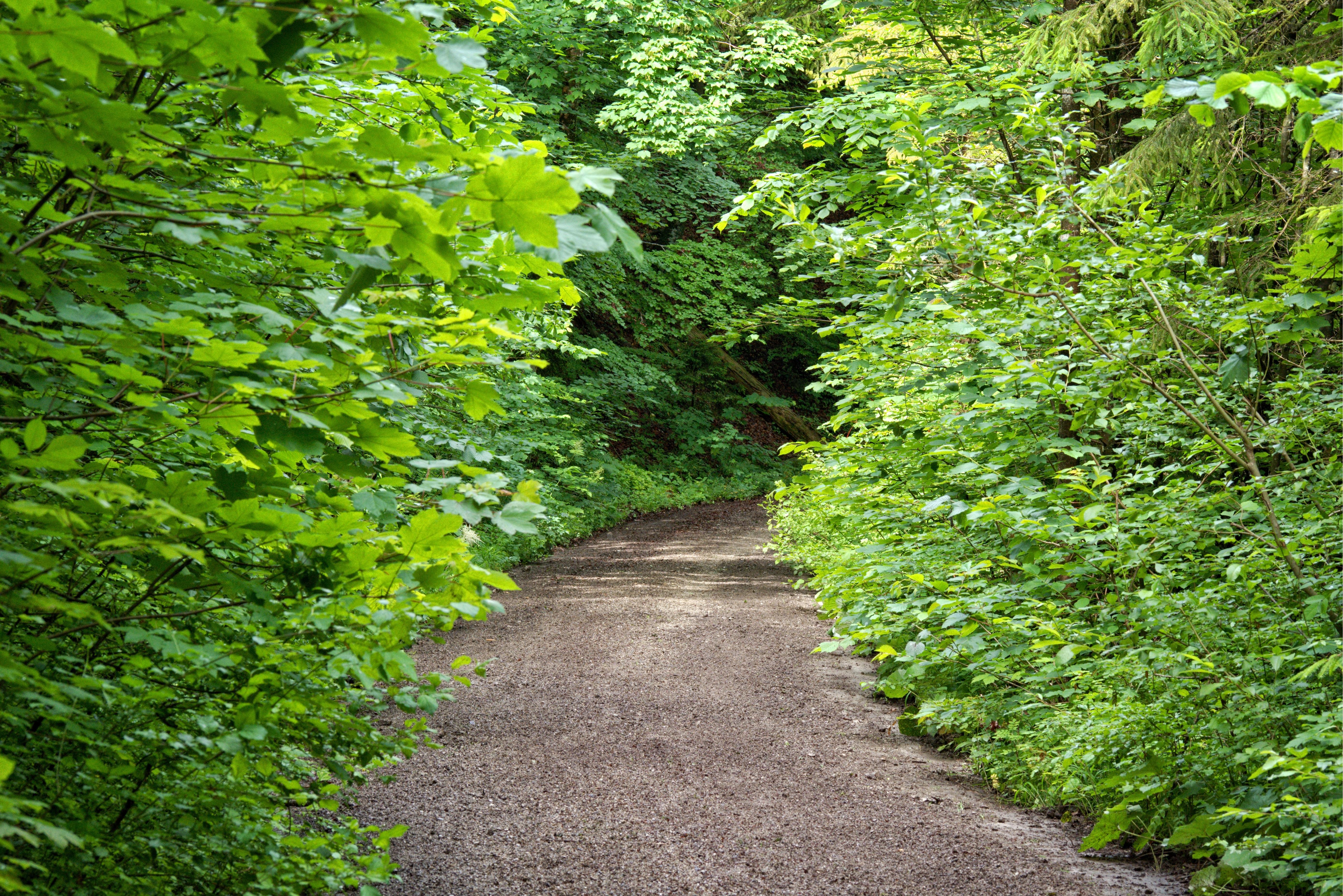 картинки с кустами в лесу журнале вышла обнажённая