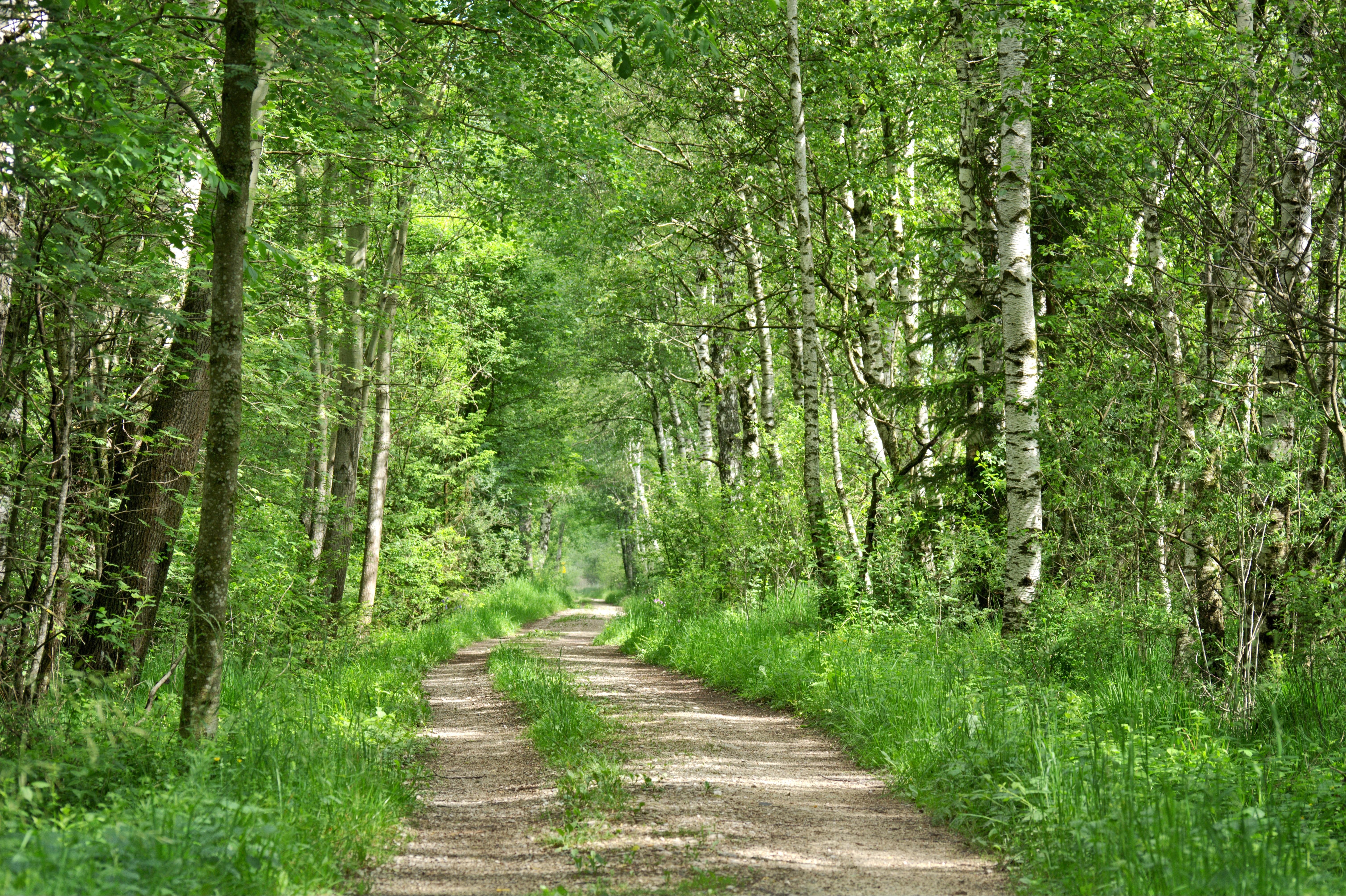 интересует картинка зеленая тропинка хочу представить