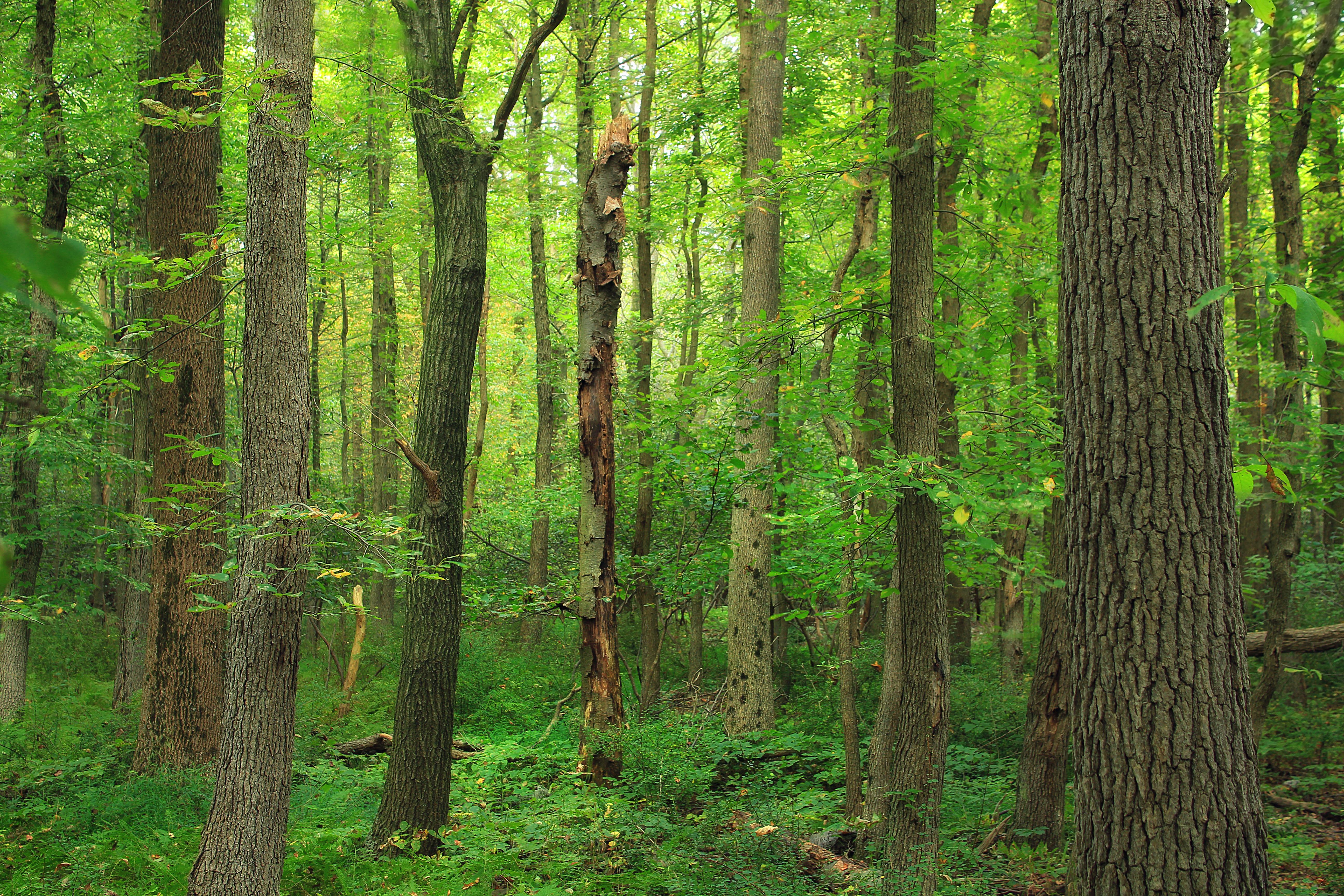 Картинки лиственный лес