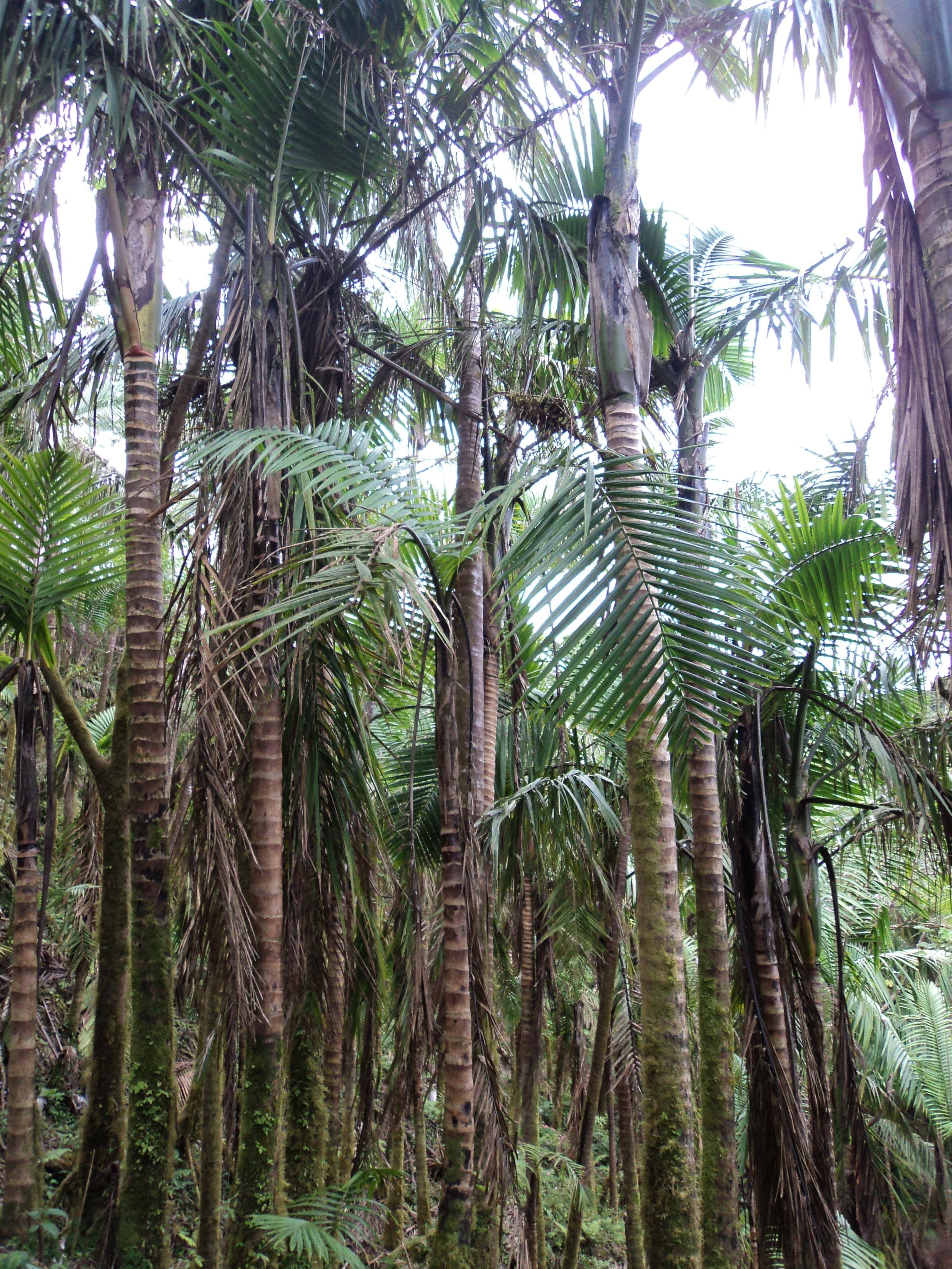 пальмы и лианы картинки начала стоит