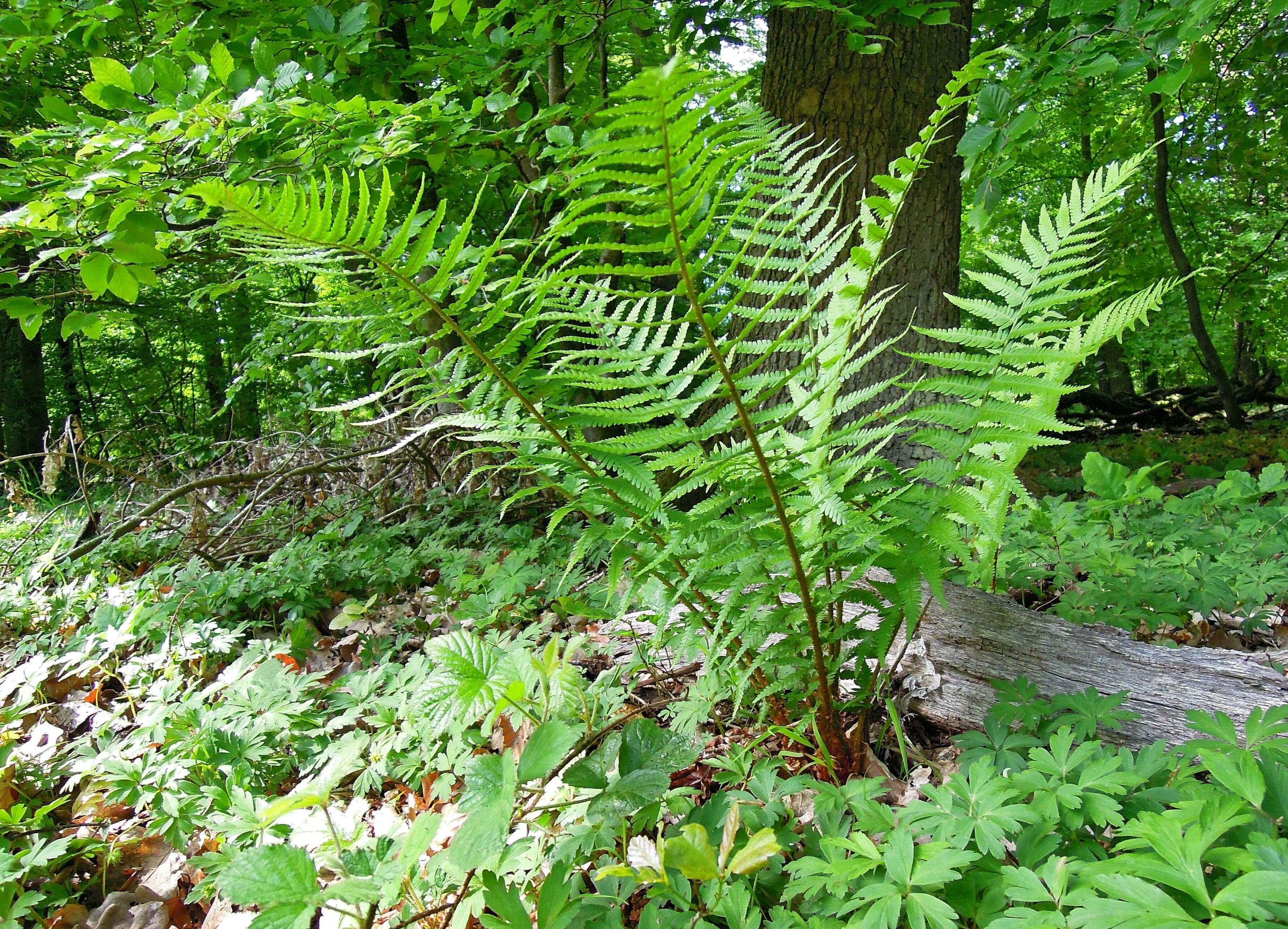 Fotos gratis rbol naturaleza hoja flor verde selva for Carson bosque y jardin