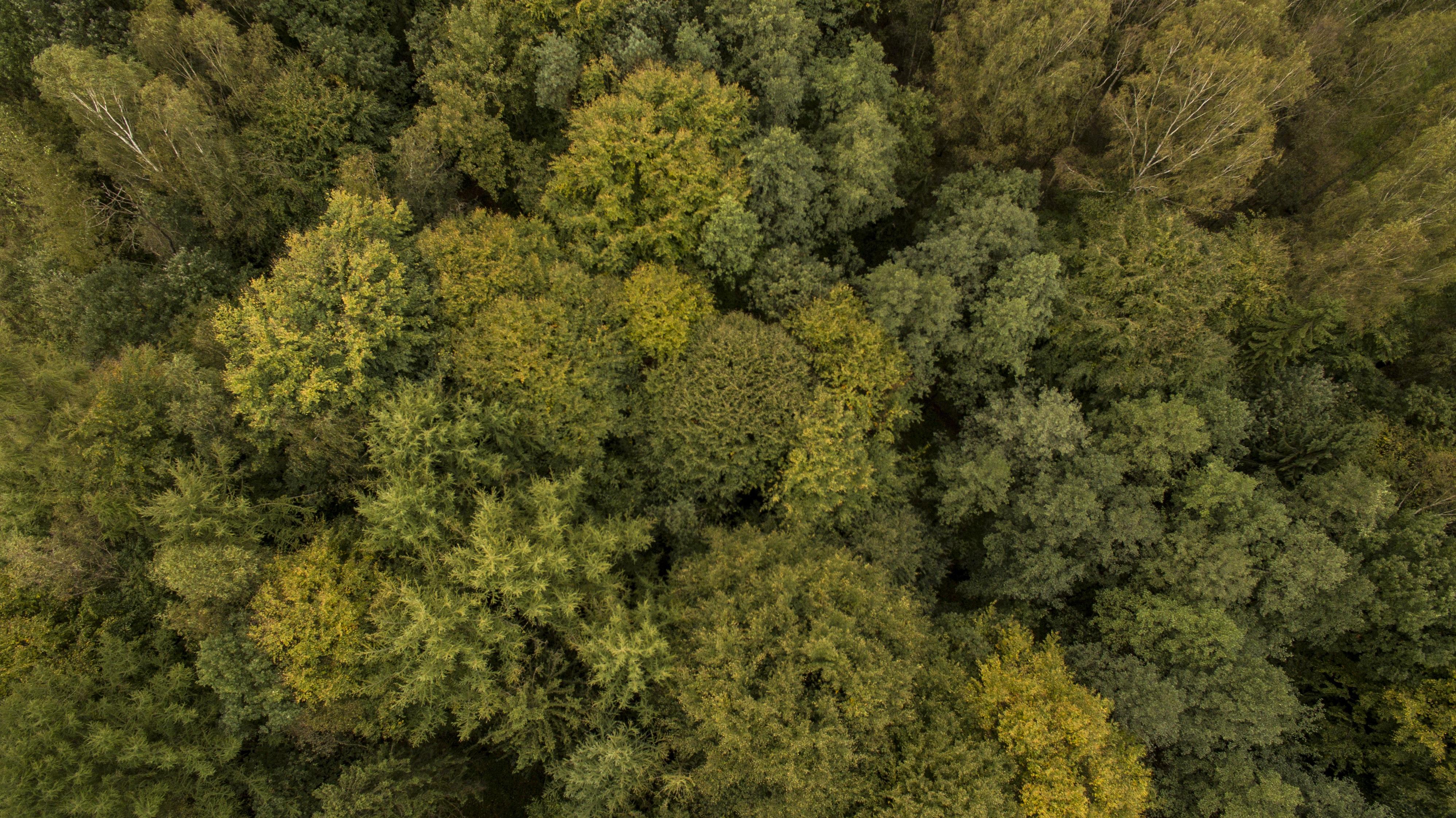 Fotos gratis rbol naturaleza bosque planta flor for Plantas arbustos de hoja perenne