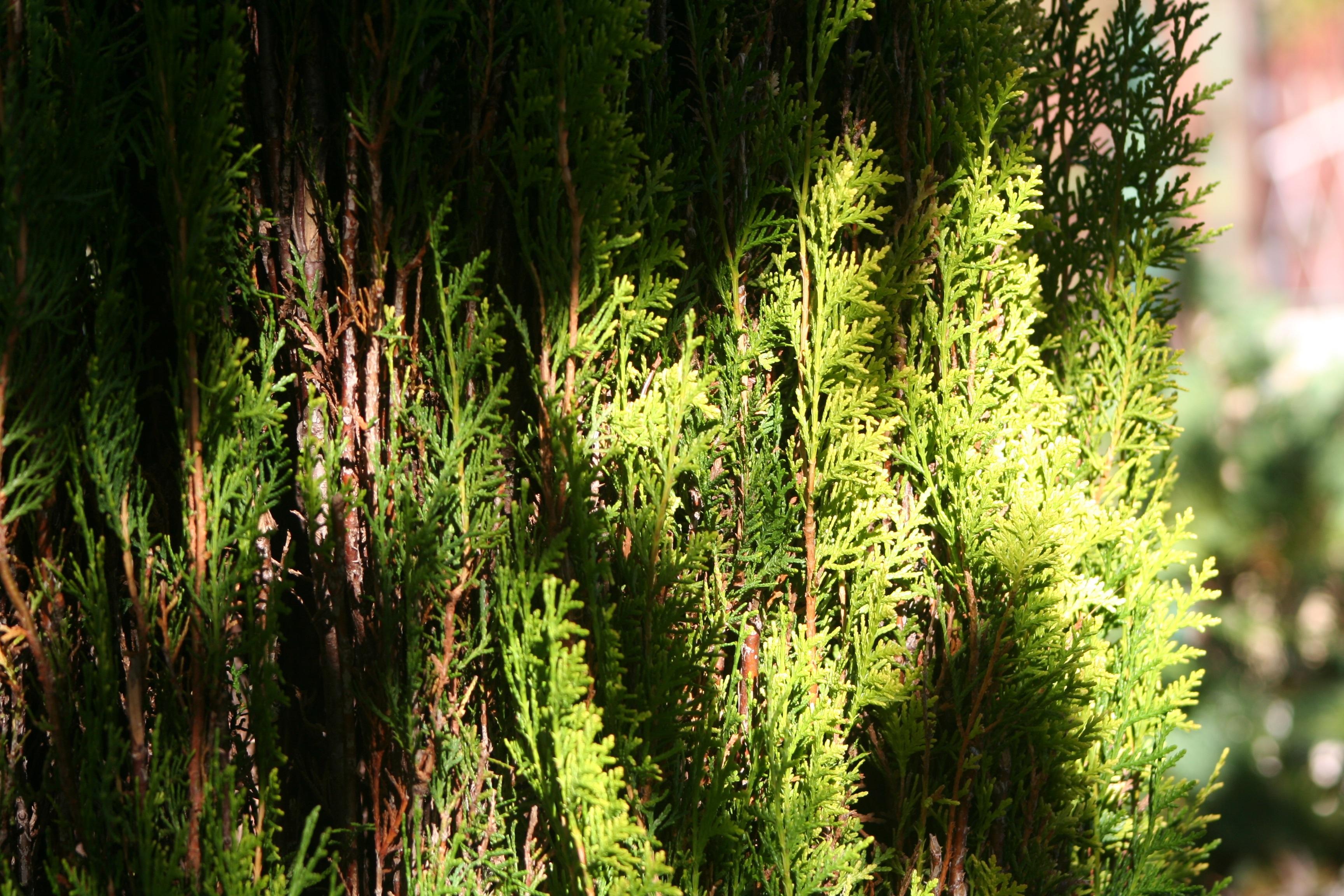 Free Images : tree, nature, leaf, flower, moss, foliage, jungle ...