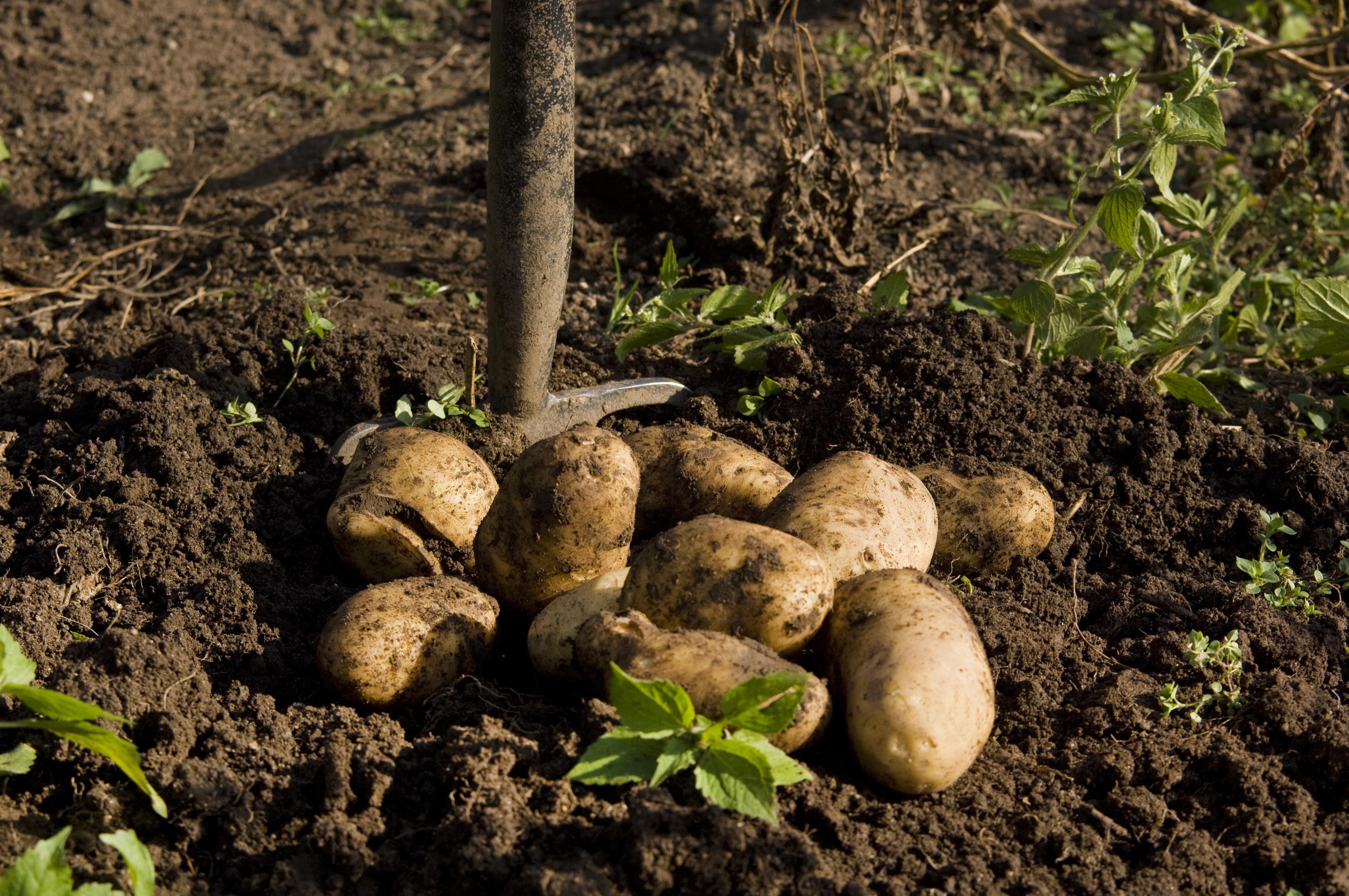 Free Images : tree, nature, forest, leaf, food, harvest, produce ...