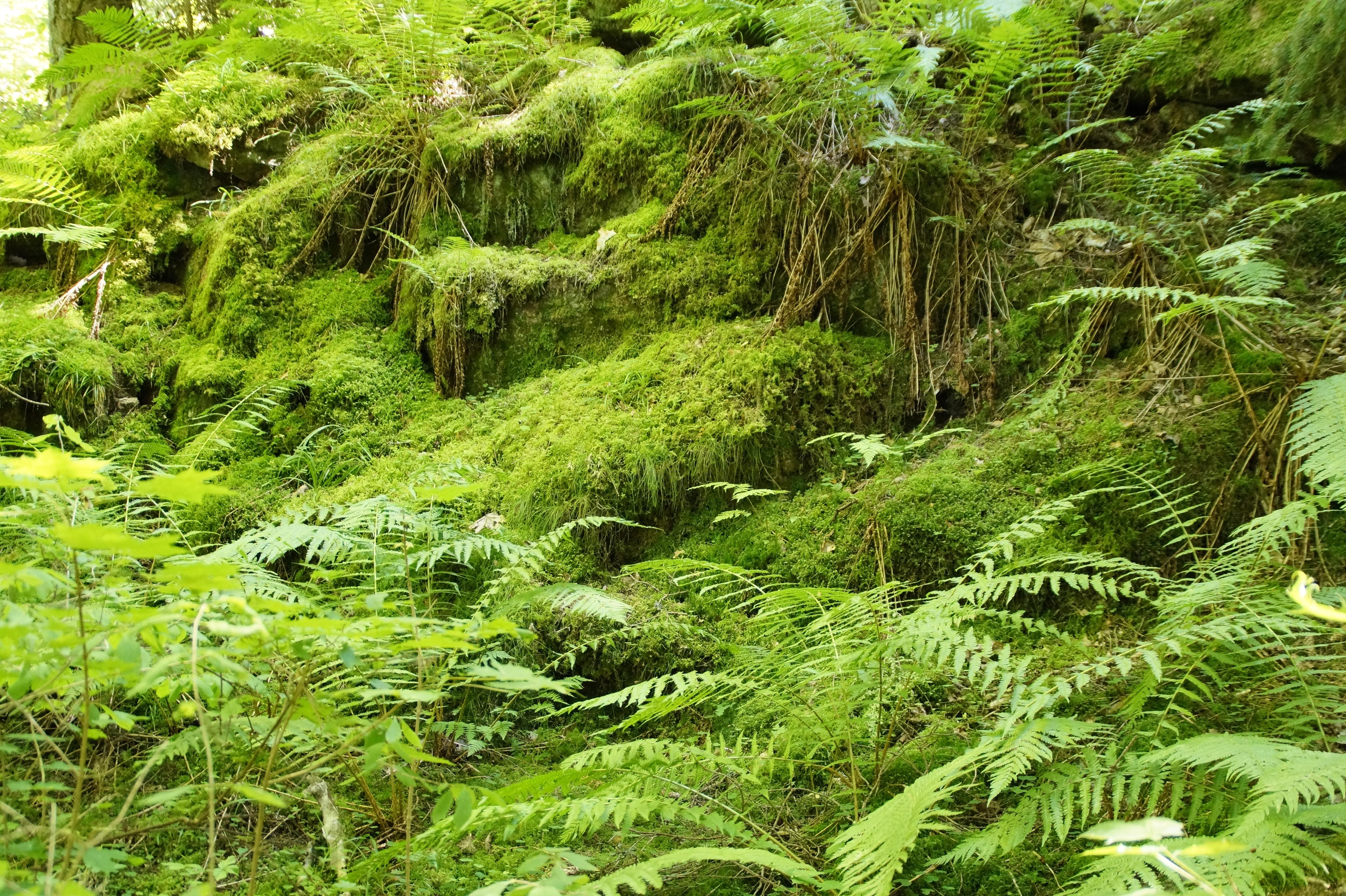 Plantas De Selva Alta: Free Images : Tree, Nature, Mystical, Moss, Idyllic, Green