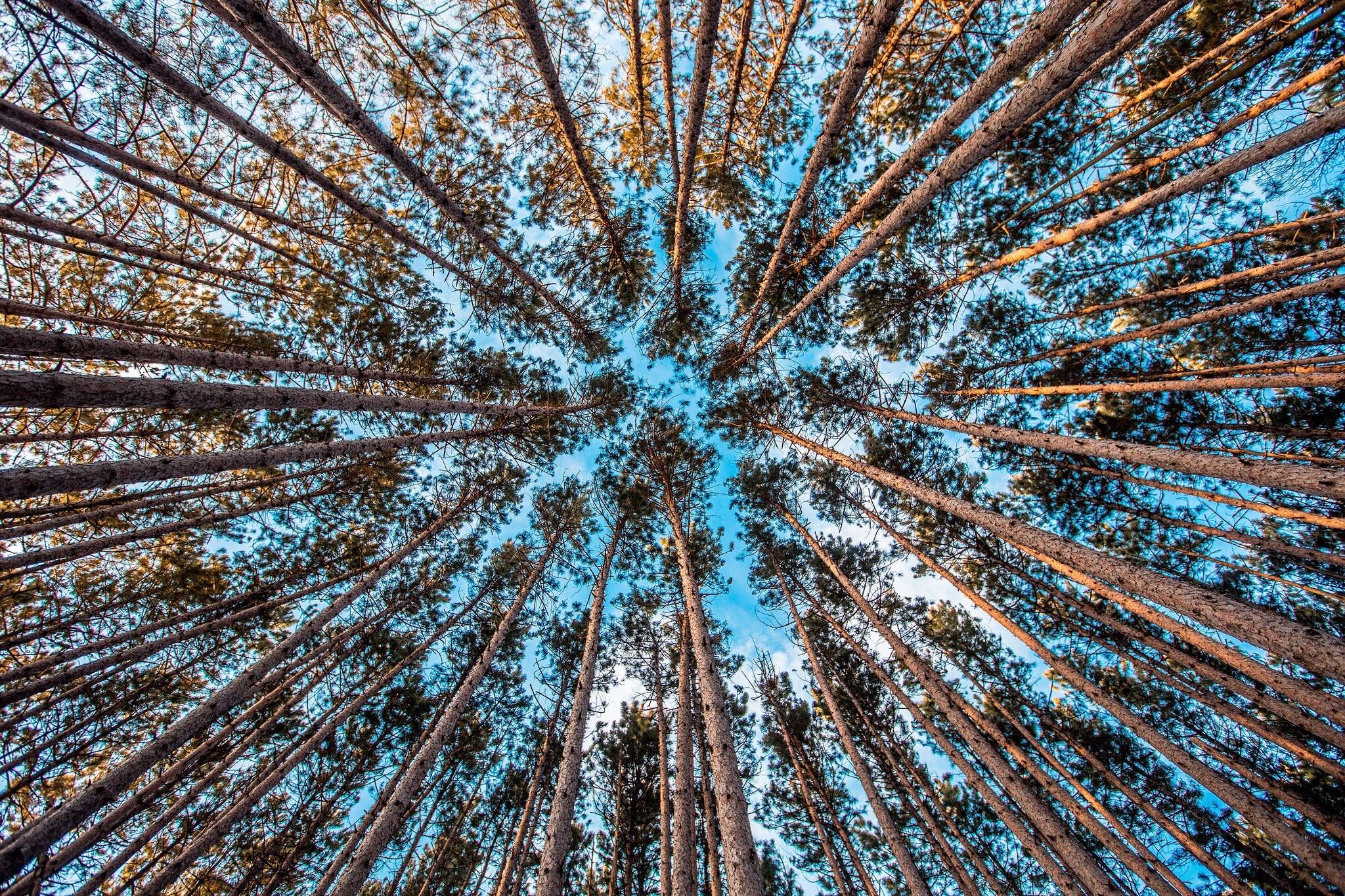 Fotos gratis : árbol, naturaleza, bosque, planta, cielo, hoja, flor ...