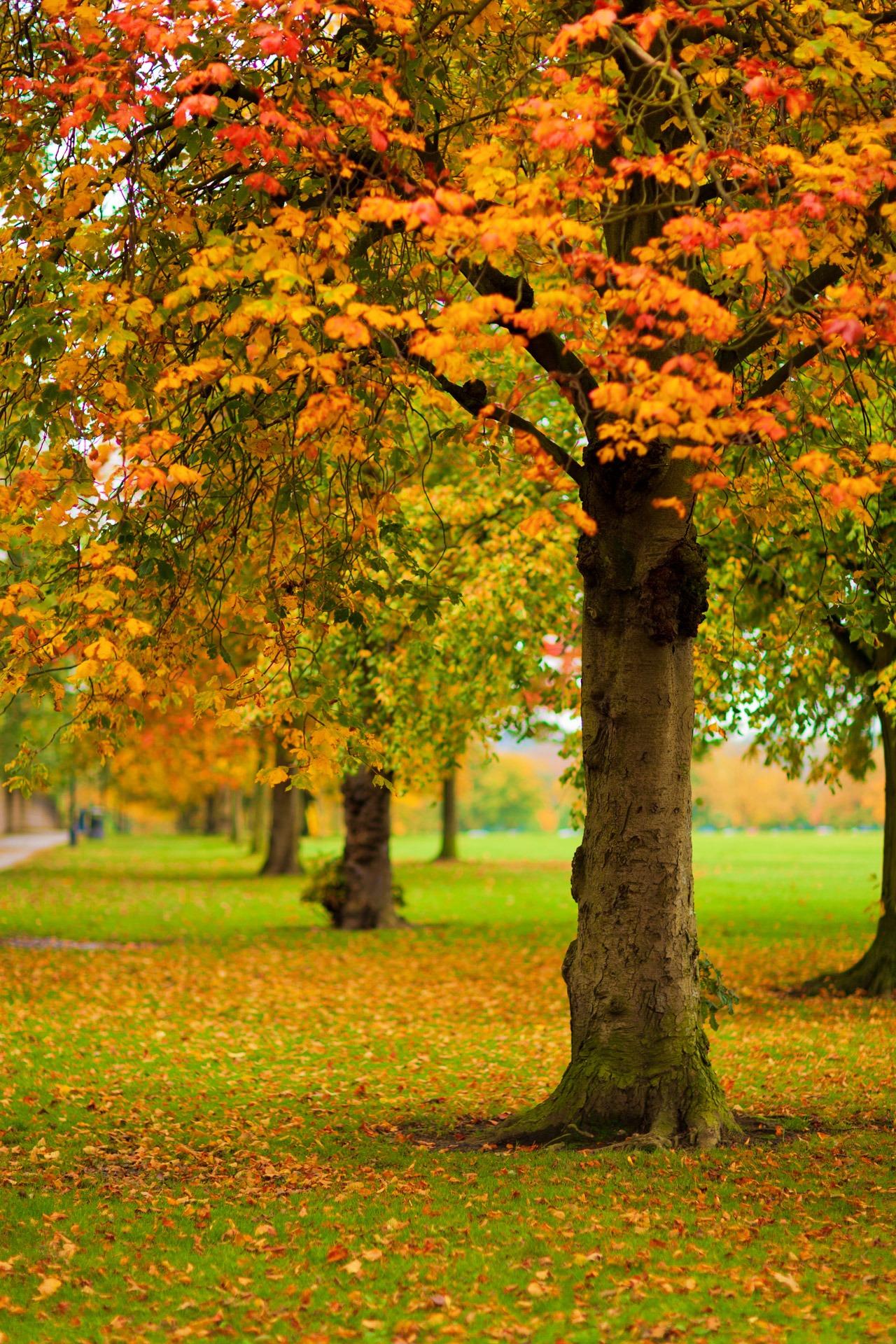 рисунок осень вертикальные картинки сентябрь загородных домов