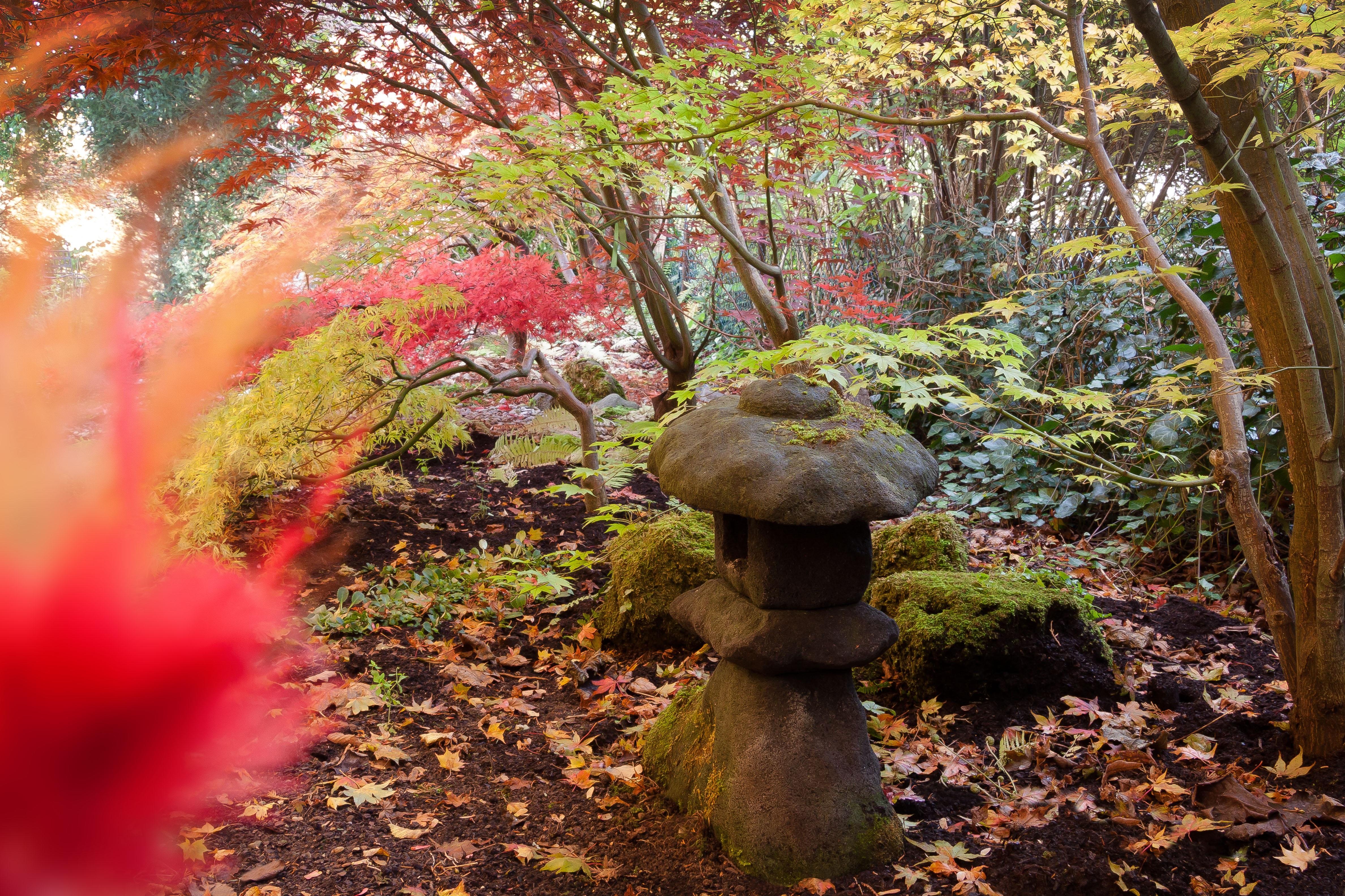 Images gratuites arbre la nature for t plante for Arbre buisson pour jardin