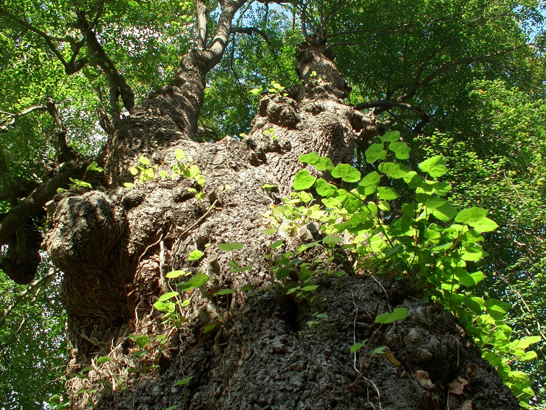Gambar Pohon Alam Menanam Jejak Daun Bunga Bagasi Aliran