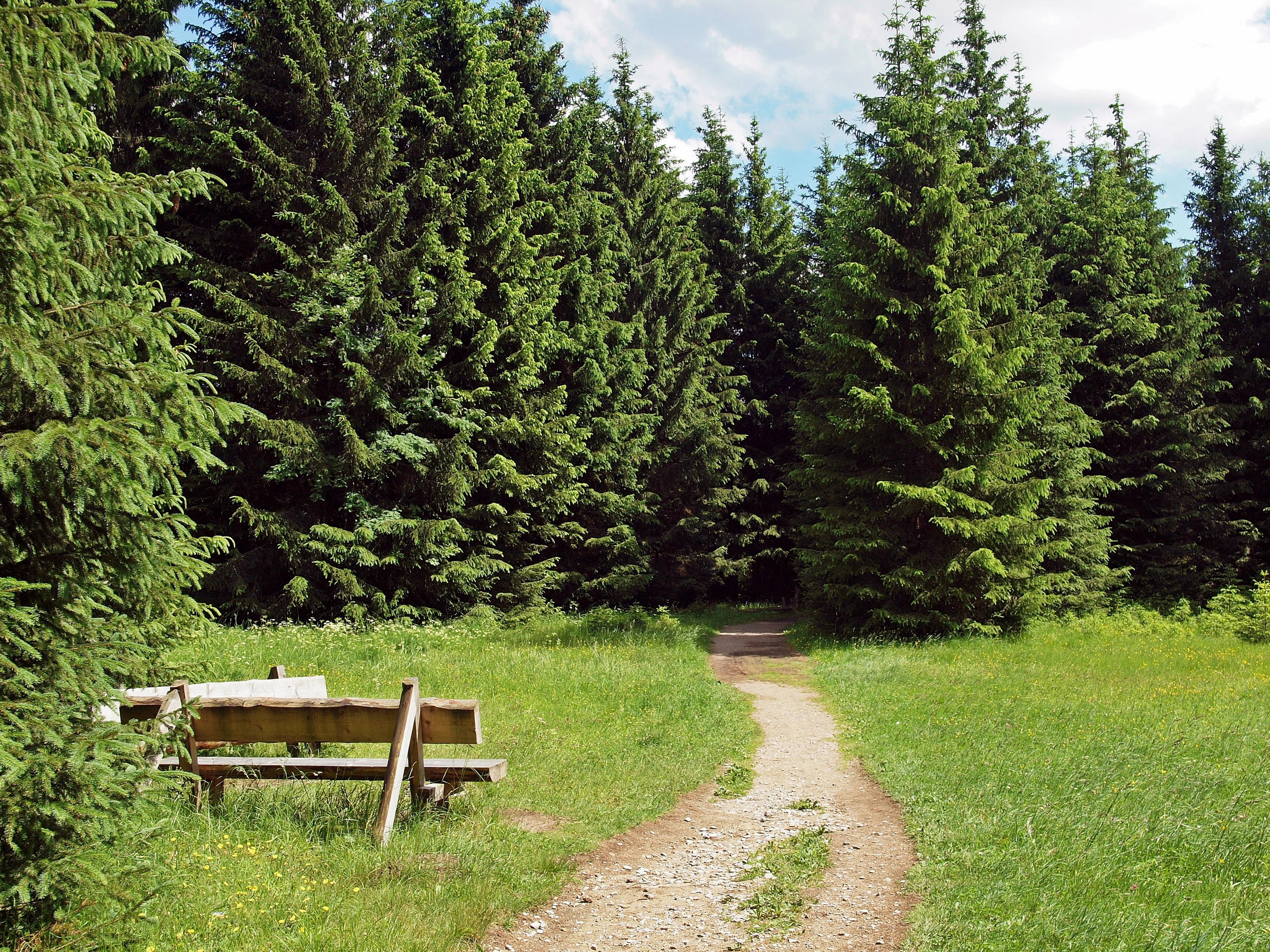 Fotos Gratis : árbol, Naturaleza, Bosque, Planta, Sendero
