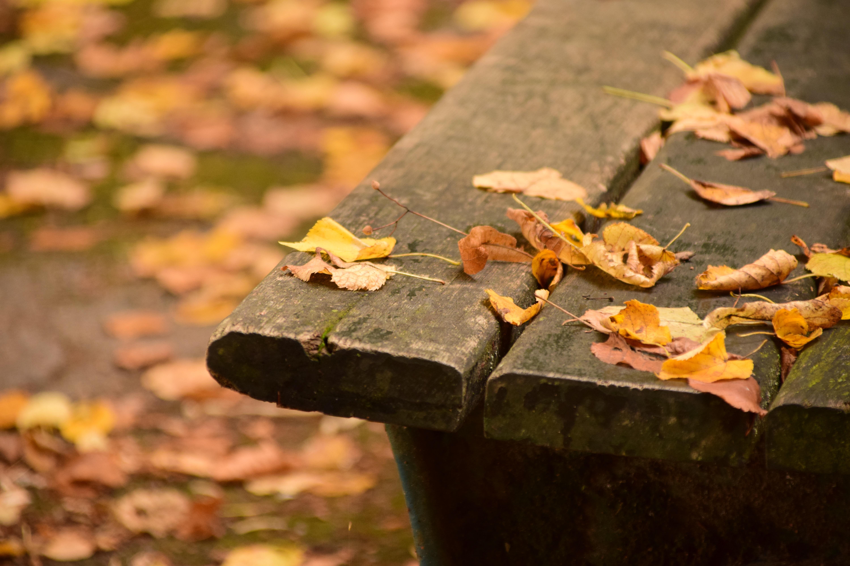 무료 이미지 : 자연, 숲, 목재, 잎, 꽃, 좌석, 늙은, 색깔, 가을 ...