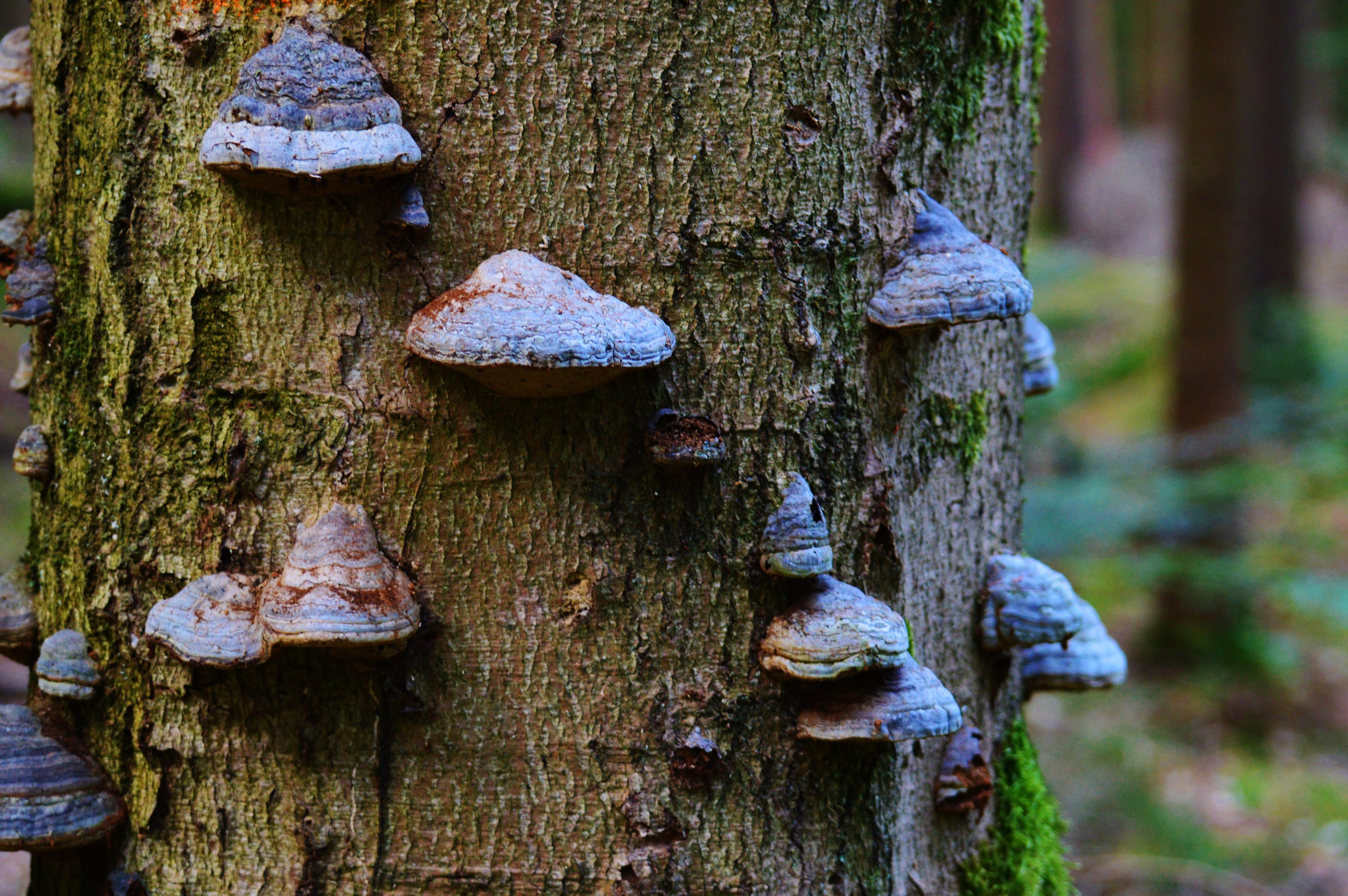 Древесные грибы картинки