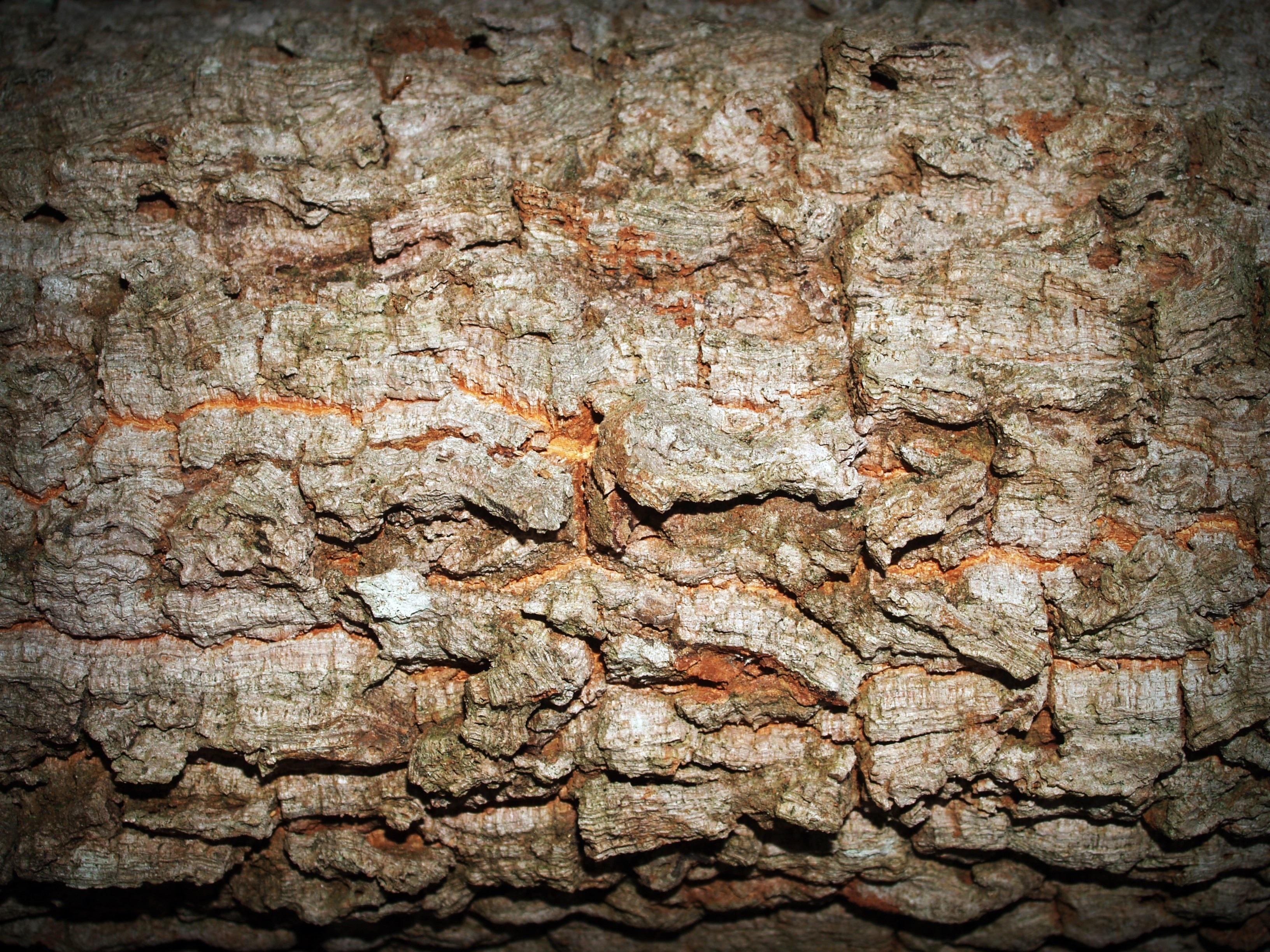 무료 이미지 : 숲, 록, 분기, 추상, 판, 목재, 고대 미술, 조직 ...