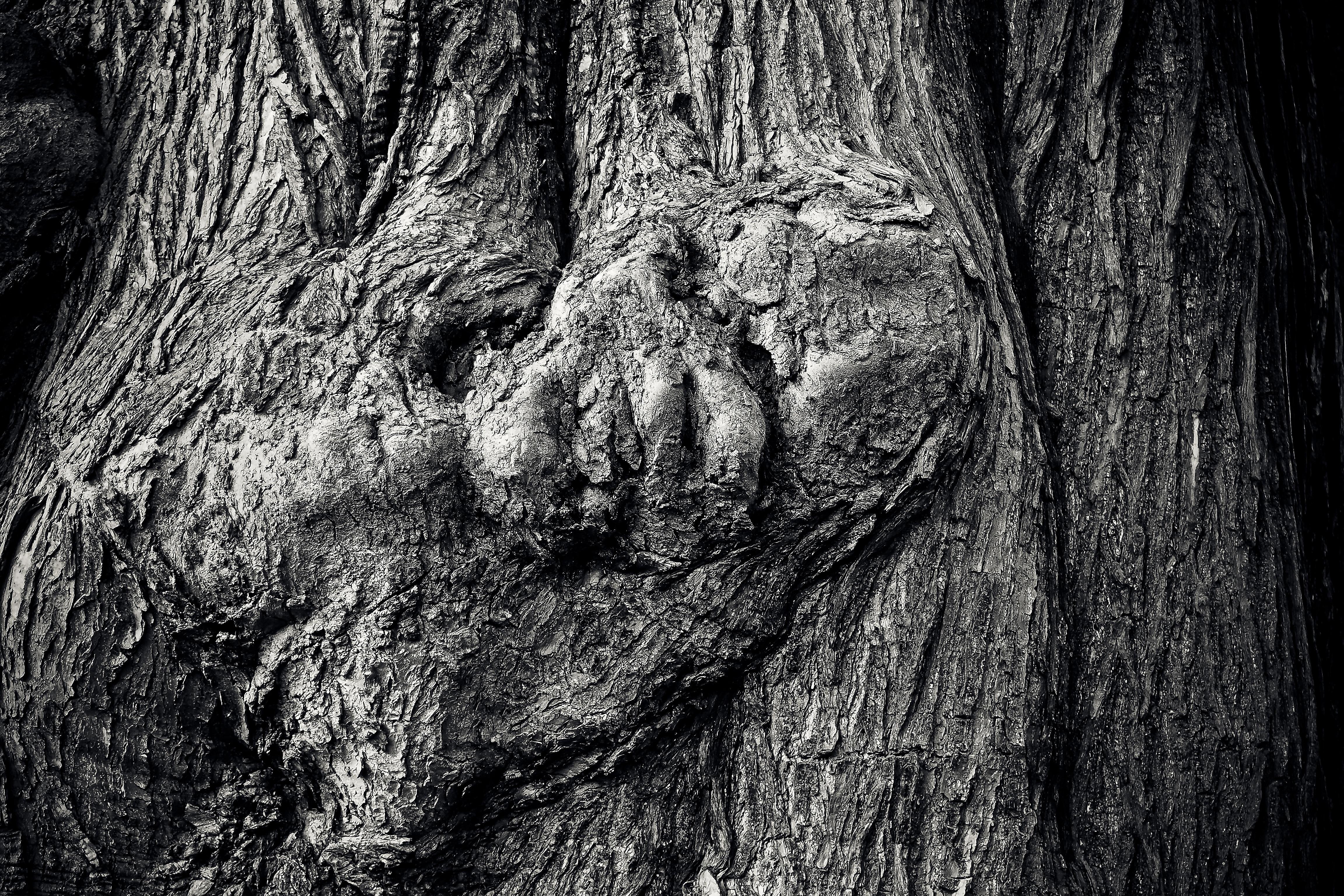 Legno Bianco E Nero : Immagini belle natura foresta roccia ramo bianco e nero