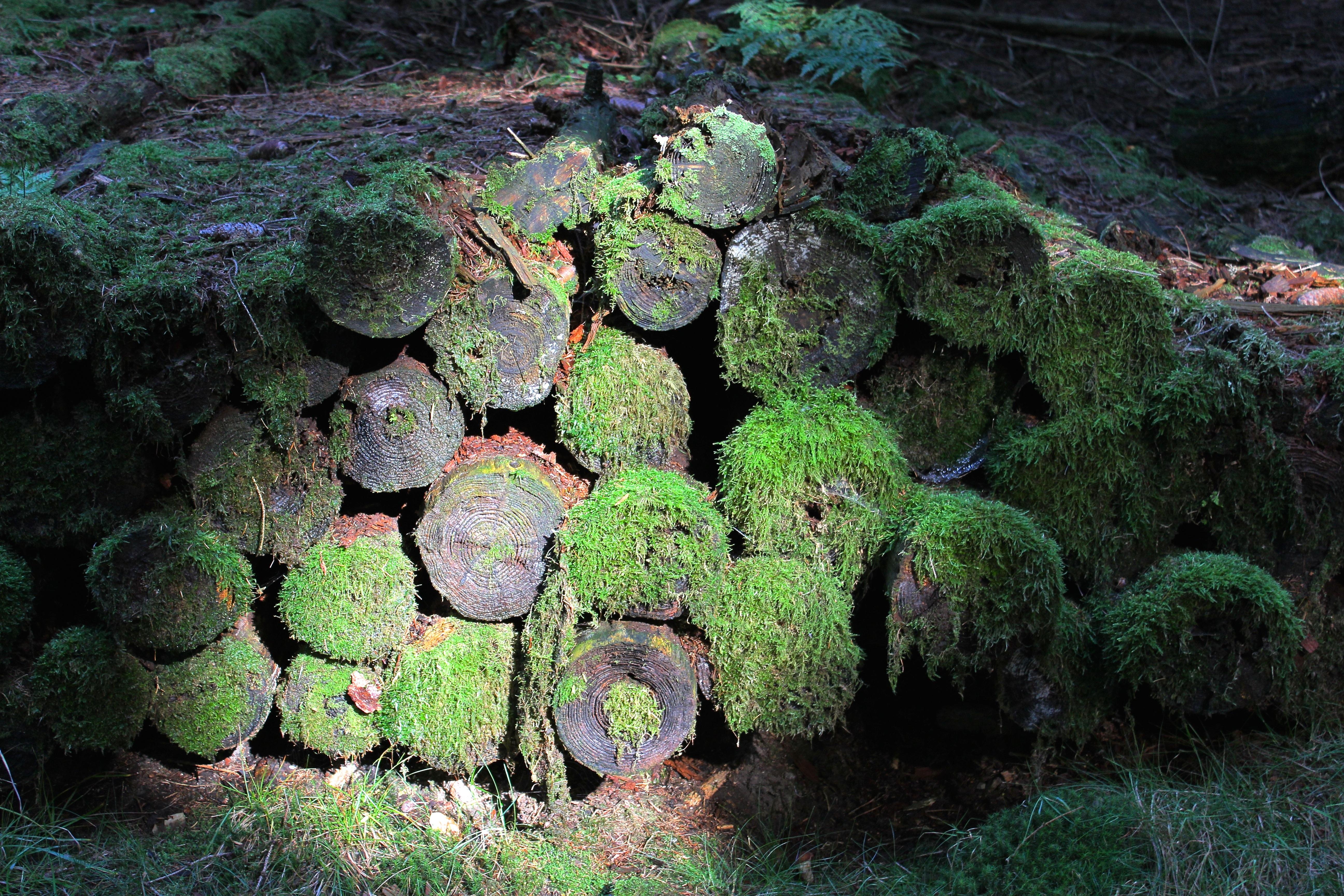 Kostenlose foto baum natur wald rock pflanze holz for Boden aquarium