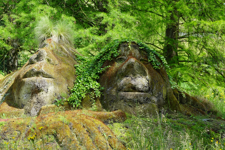 Первобытность лес картинки