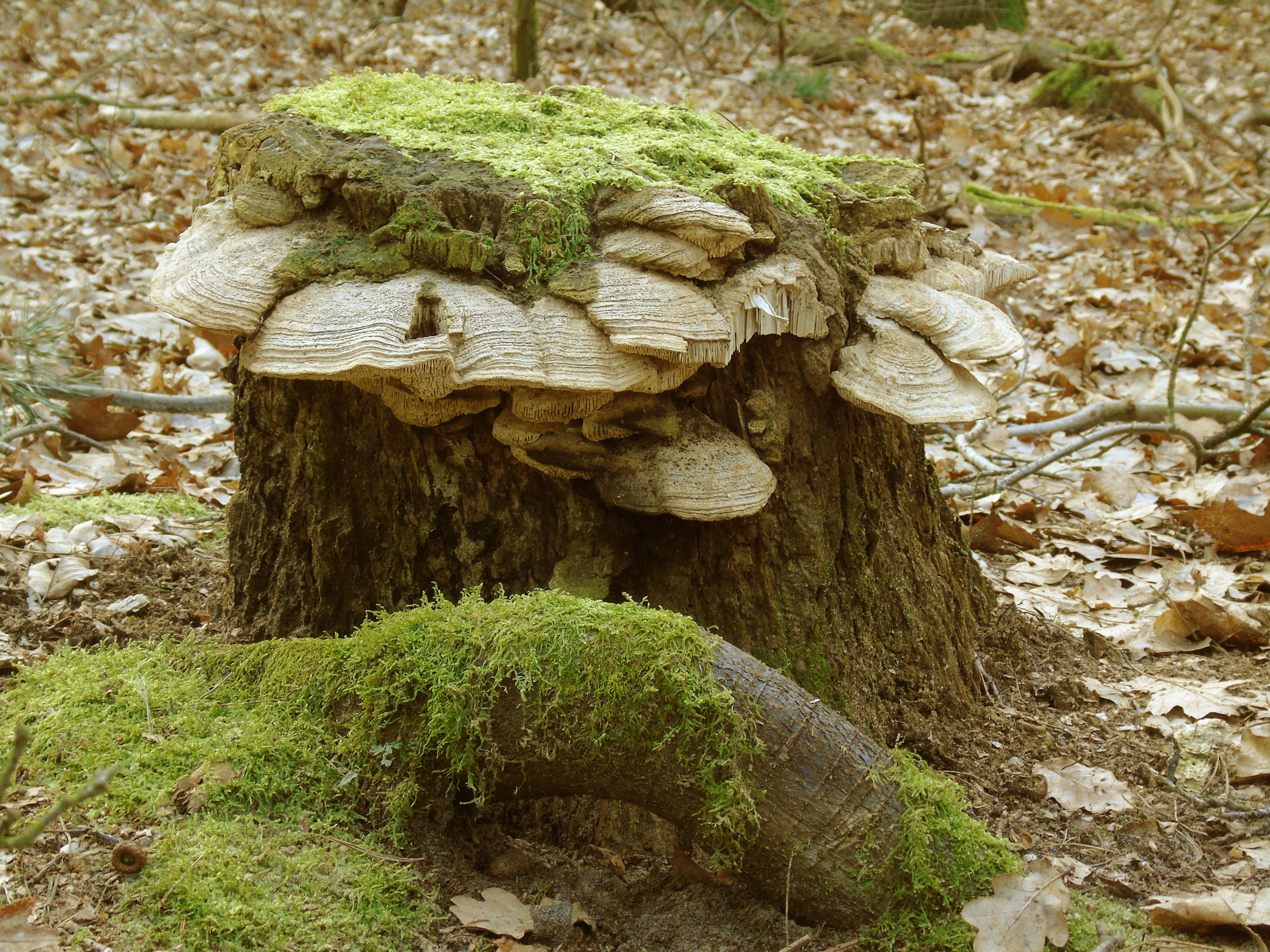 images gratuites arbre la nature for t roche r gion sauvage plante feuille fleur tronc. Black Bedroom Furniture Sets. Home Design Ideas