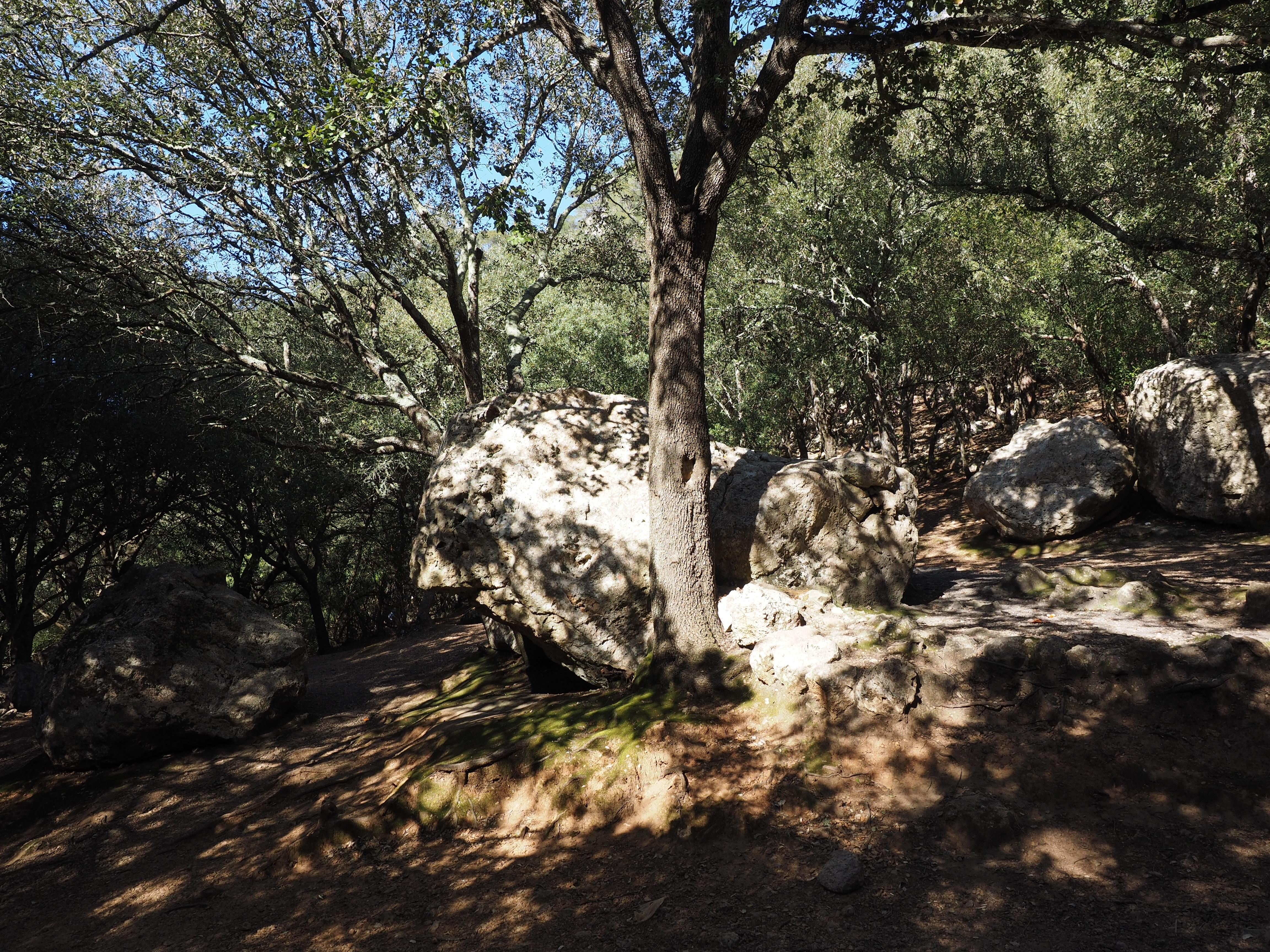 Fotos gratis rbol naturaleza bosque rock desierto - Calizas mallorca ...