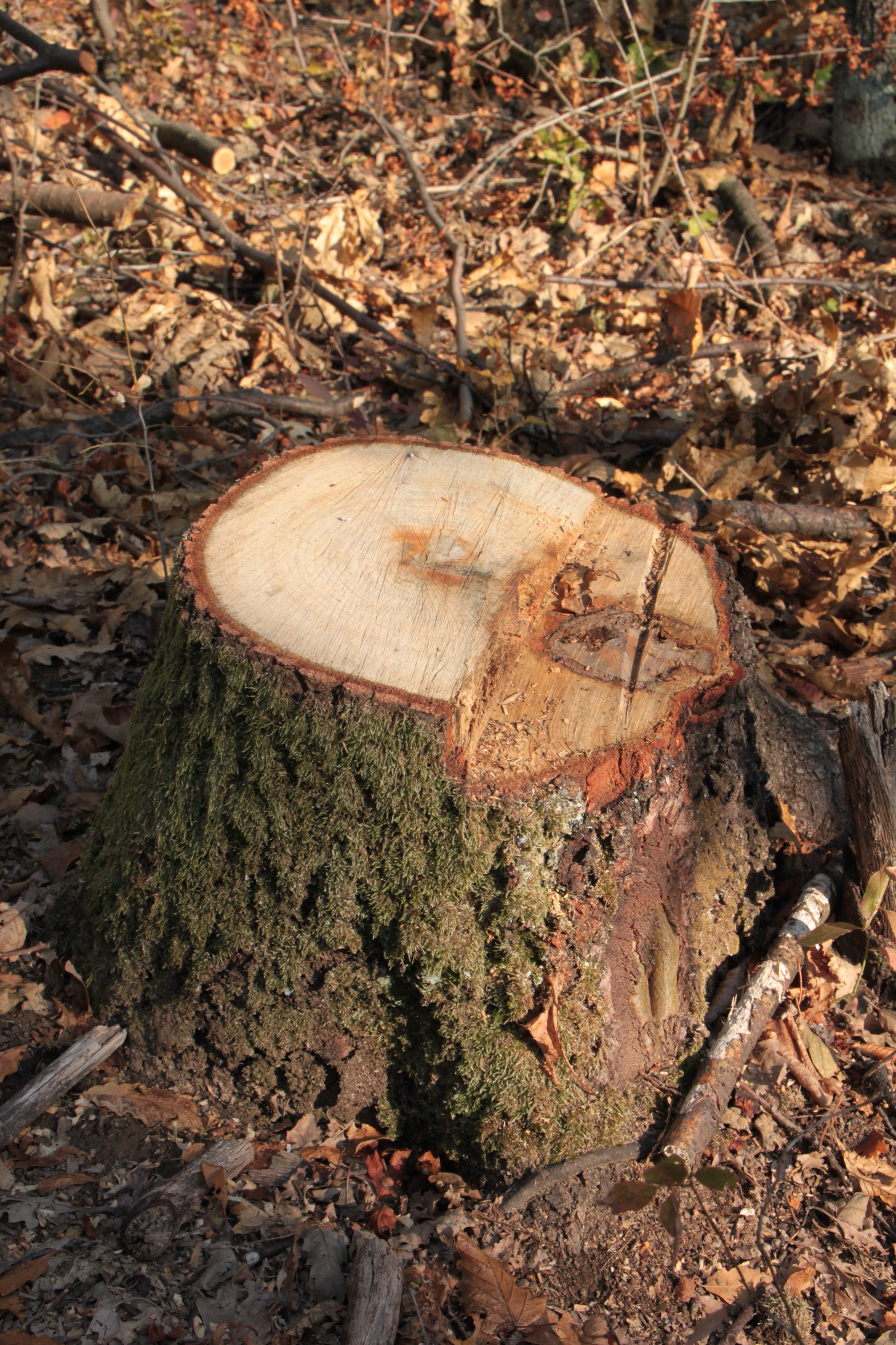 Fotos gratis naturaleza bosque rock desierto madera - Cortar hierba alta ...