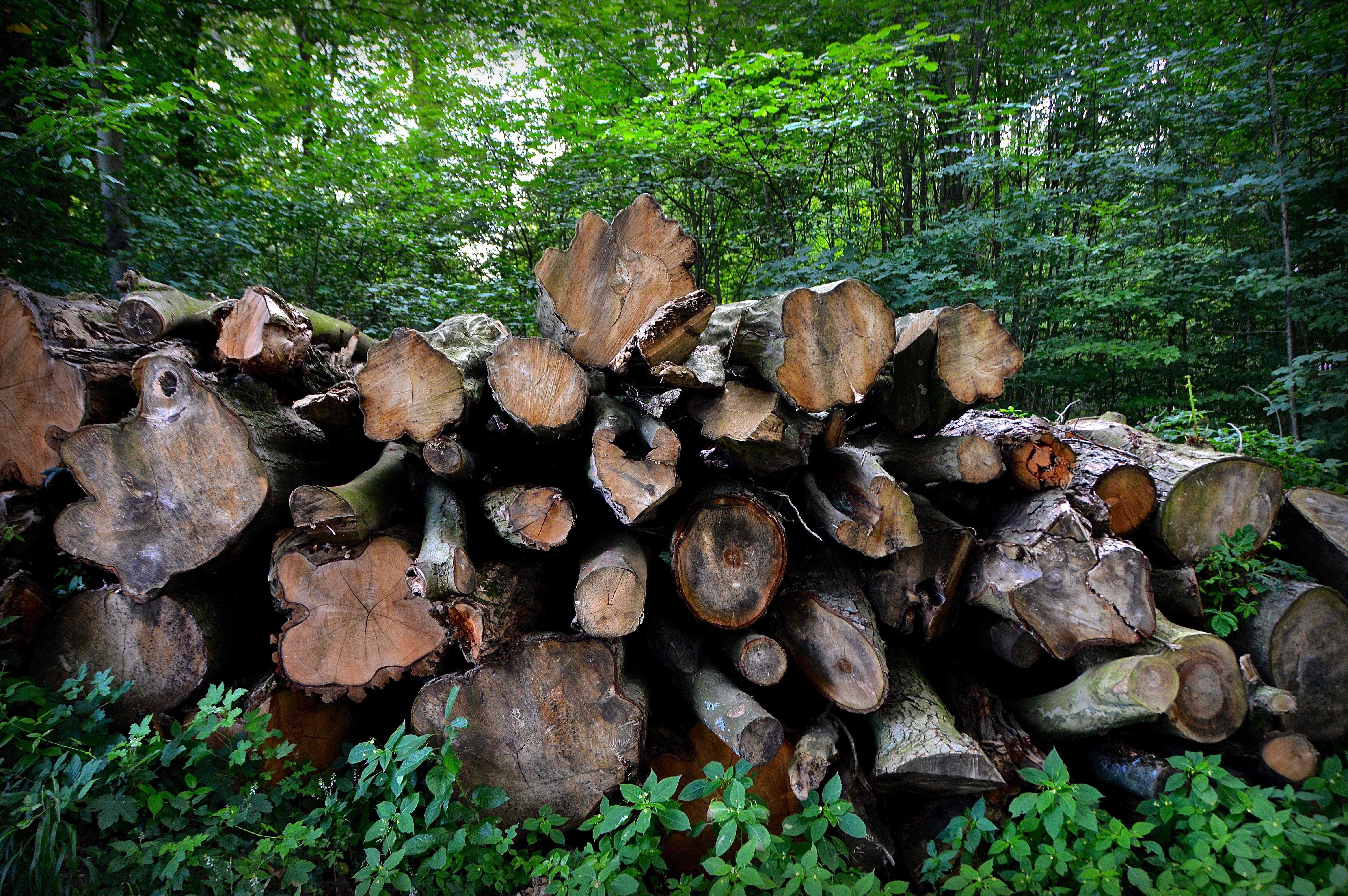 images gratuites arbre la nature roche feuille tronc b che vert jungle bouleau l. Black Bedroom Furniture Sets. Home Design Ideas
