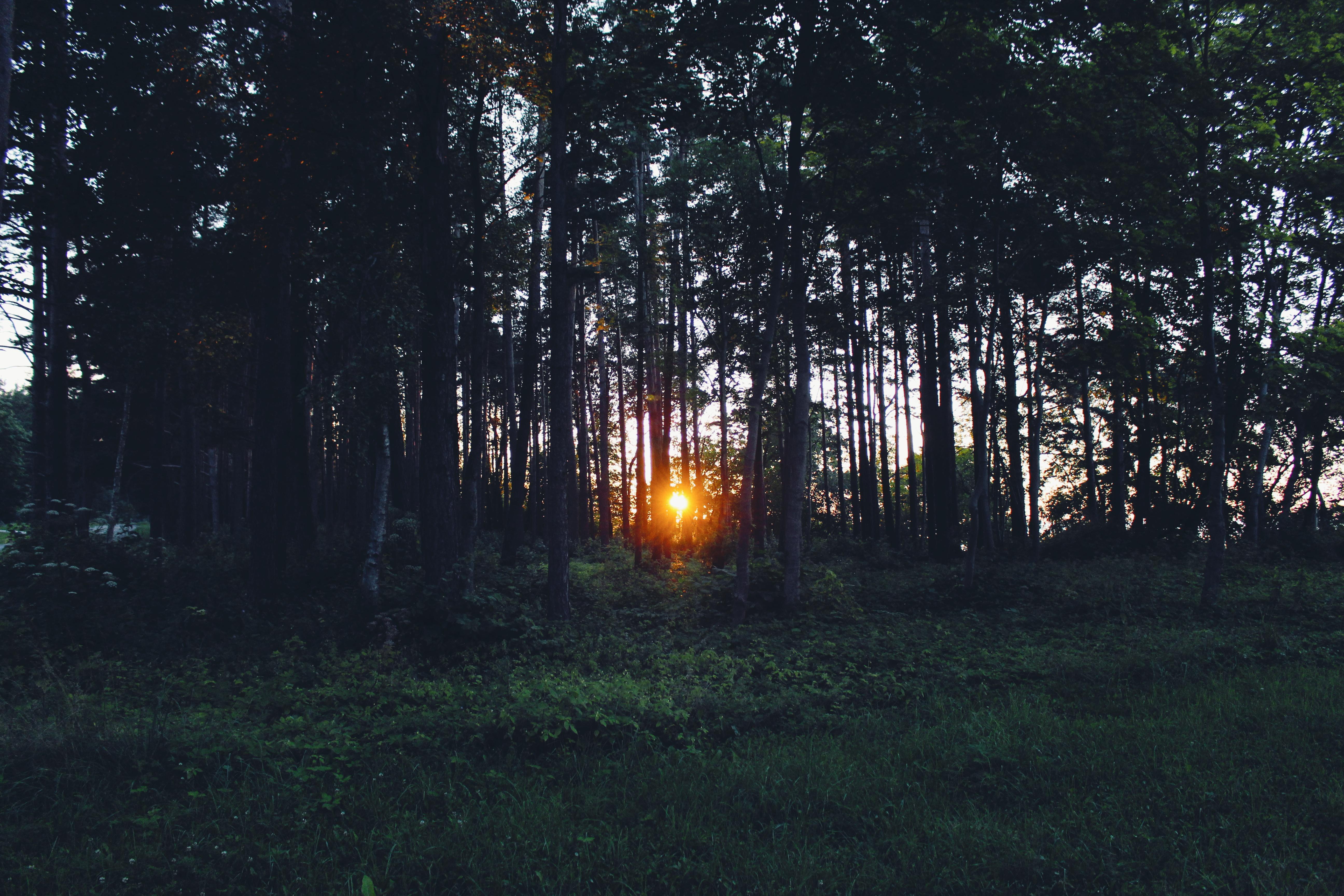 Картинки с вечерним лесом